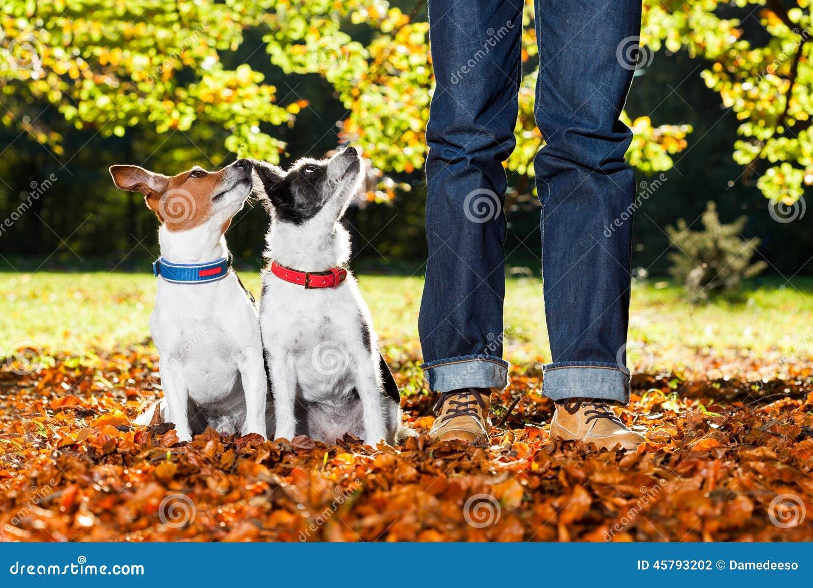 Psy i właściciel