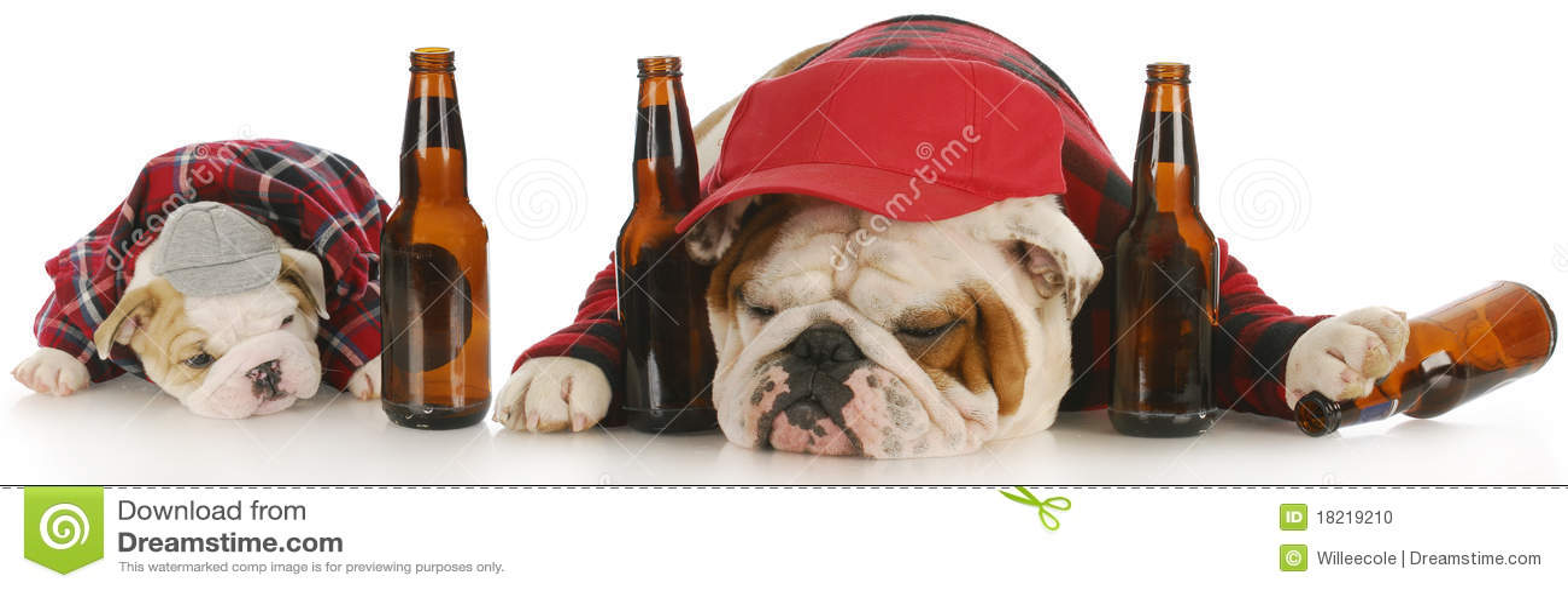 Psy pijący