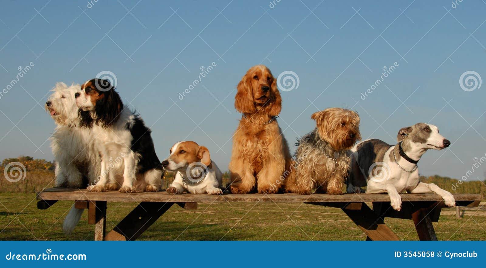 Psy trochę