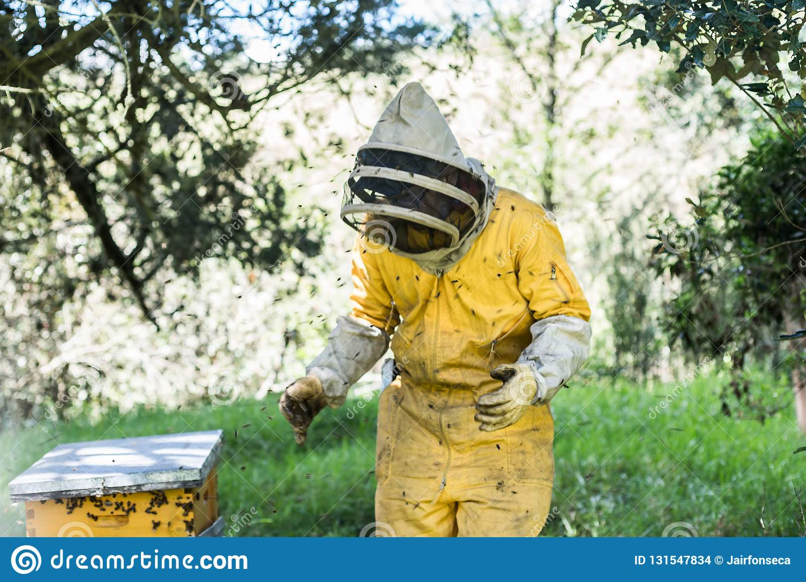 Pszczelarka, pszczoły lata blisko do honeycomb