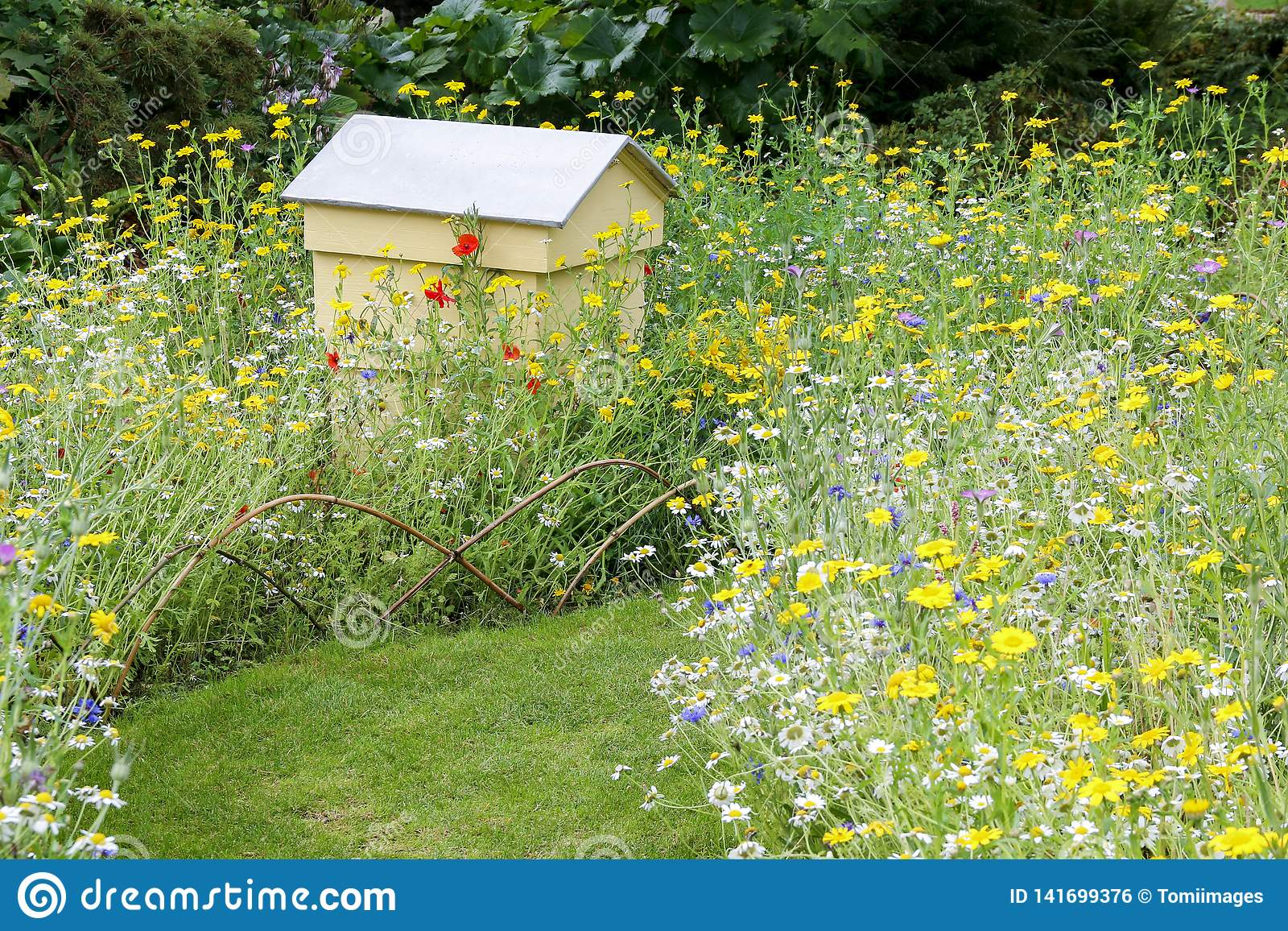 Pszczoła rój ustawiający w wildflower ogródzie