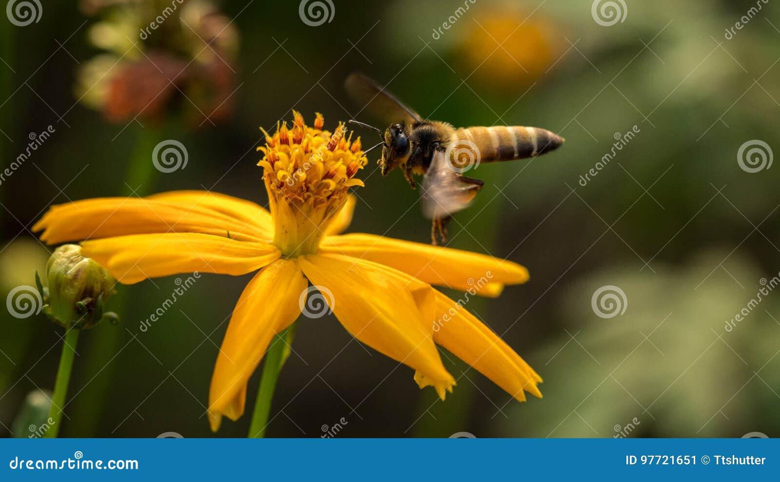 Pszczoła z kwiatami
