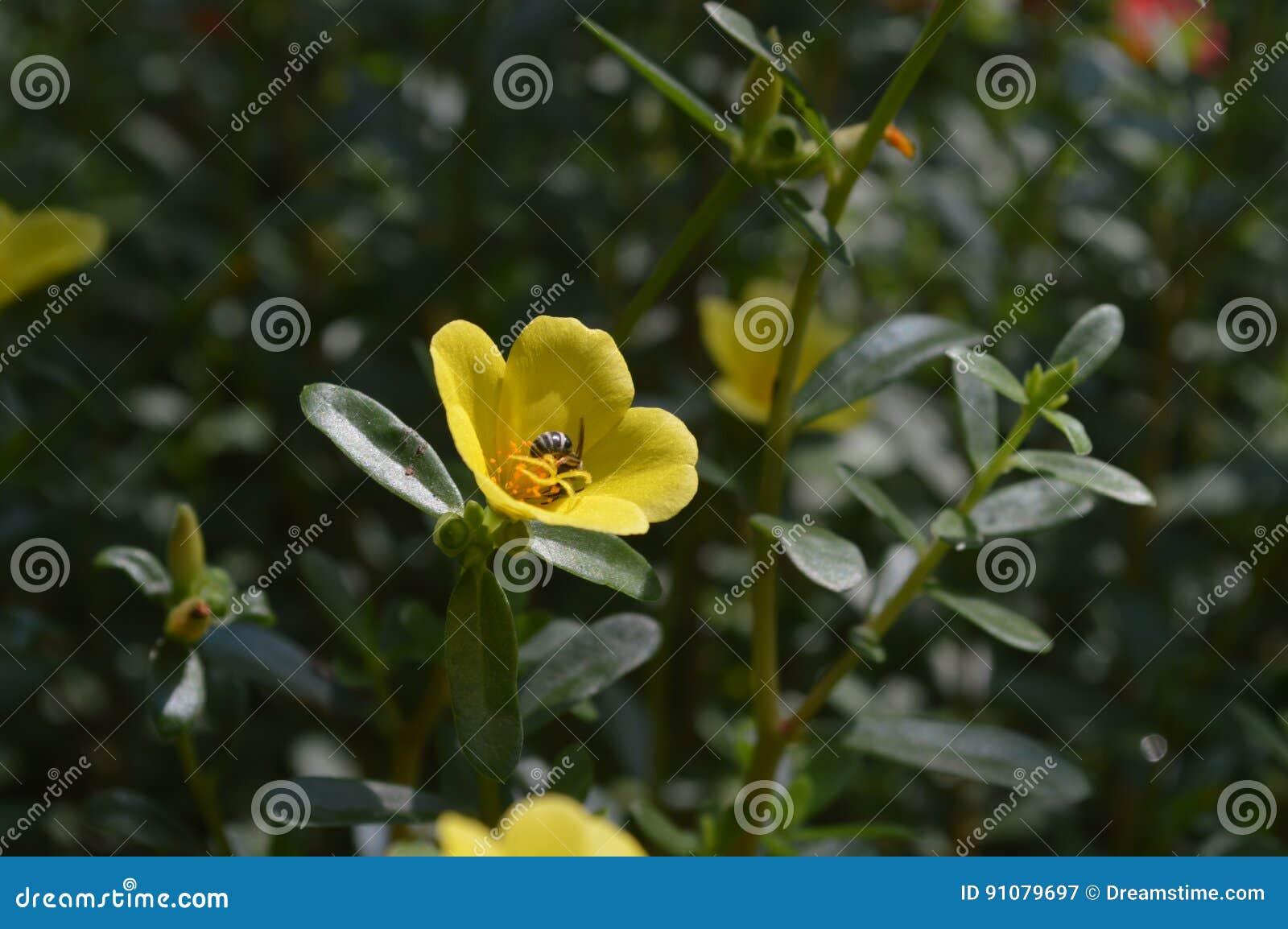 Pszczoły i kwiaty