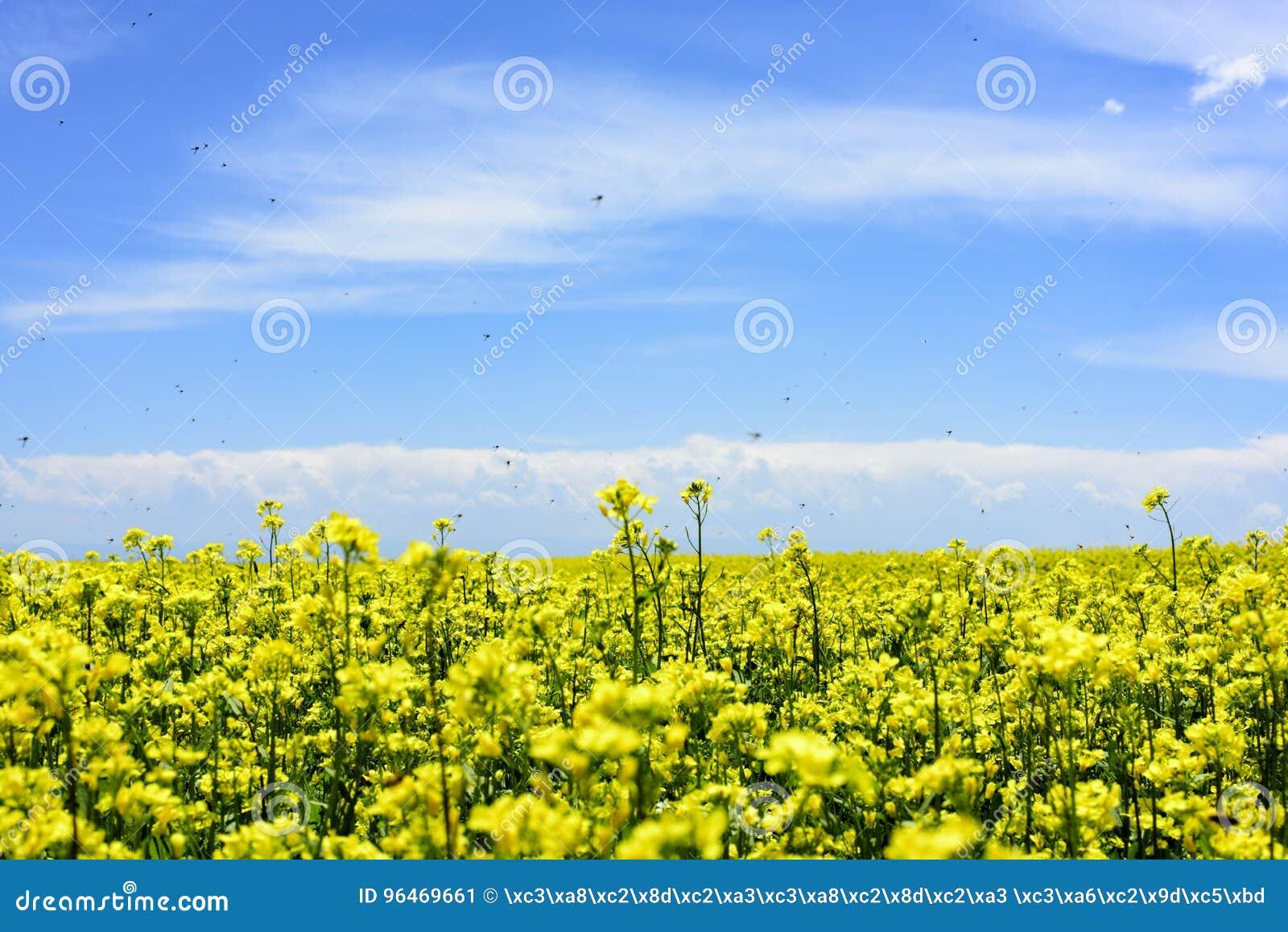 Pszczoły które podnoszą miód w gwałta polu