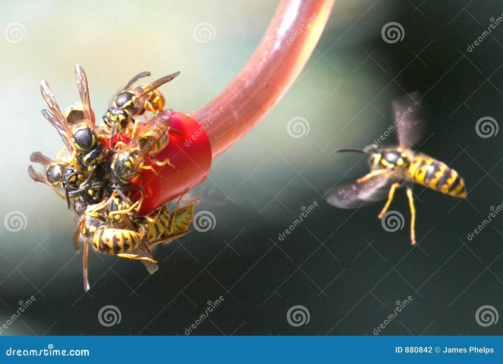 Pszczoły kurtki żółty