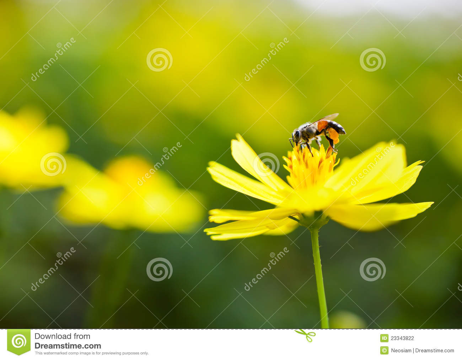 Pszczoły miodu wizerunek