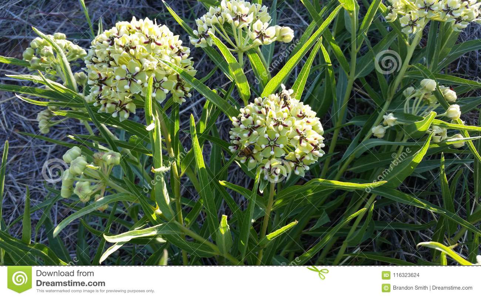 Pszczoły Na Żółtych kwiat żarówkach