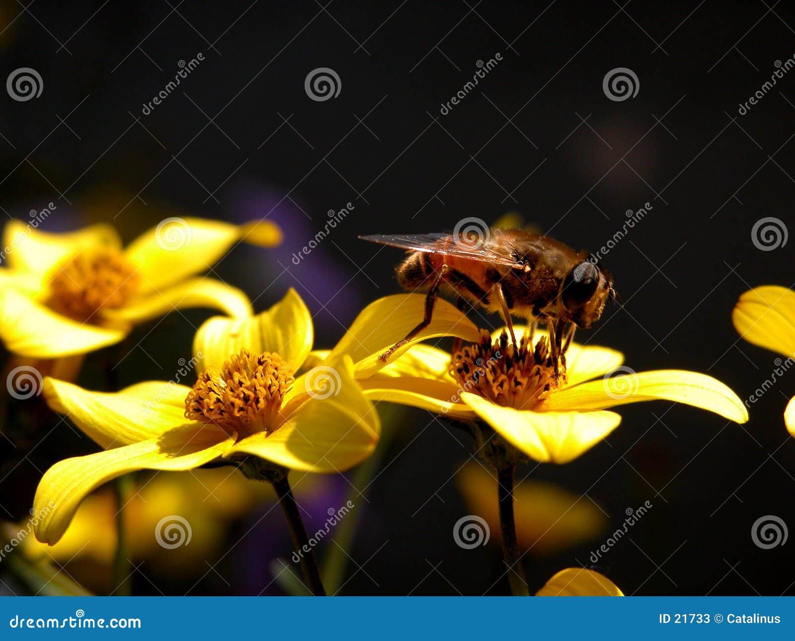 Pszczoły pracy