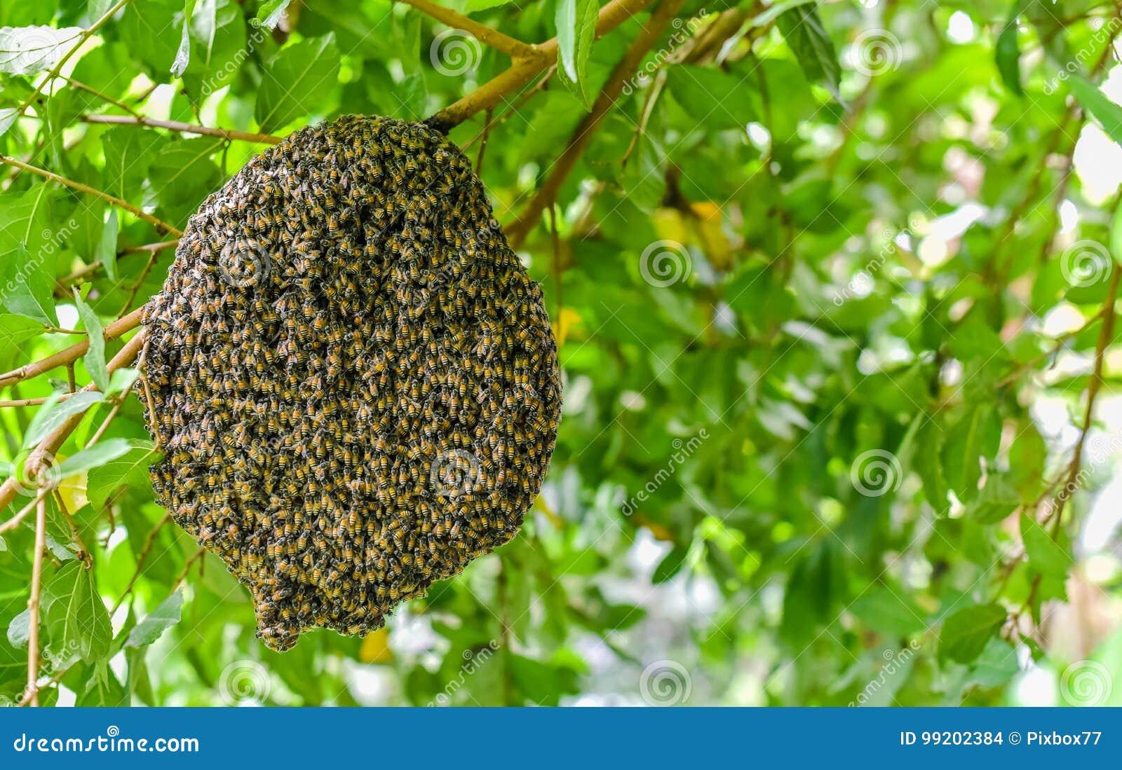 Pszczoły przy honeycomb