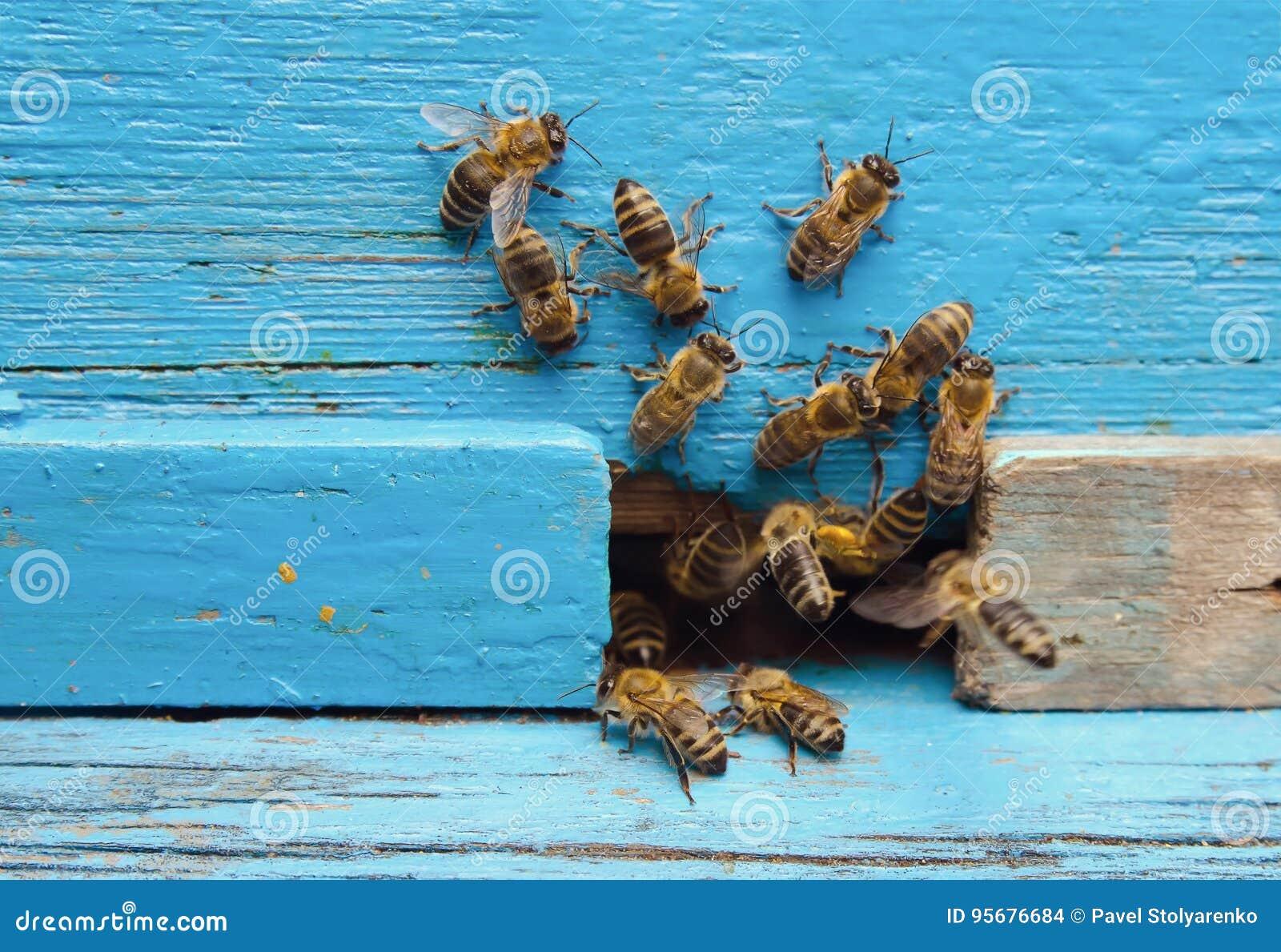 Pszczoły z miodem