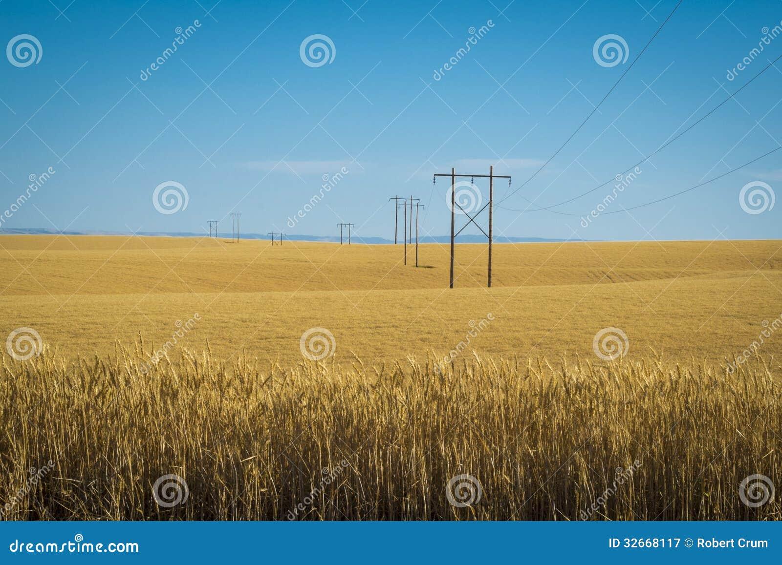 Pszeniczni pola, linie energetyczne, wschodni Waszyngton