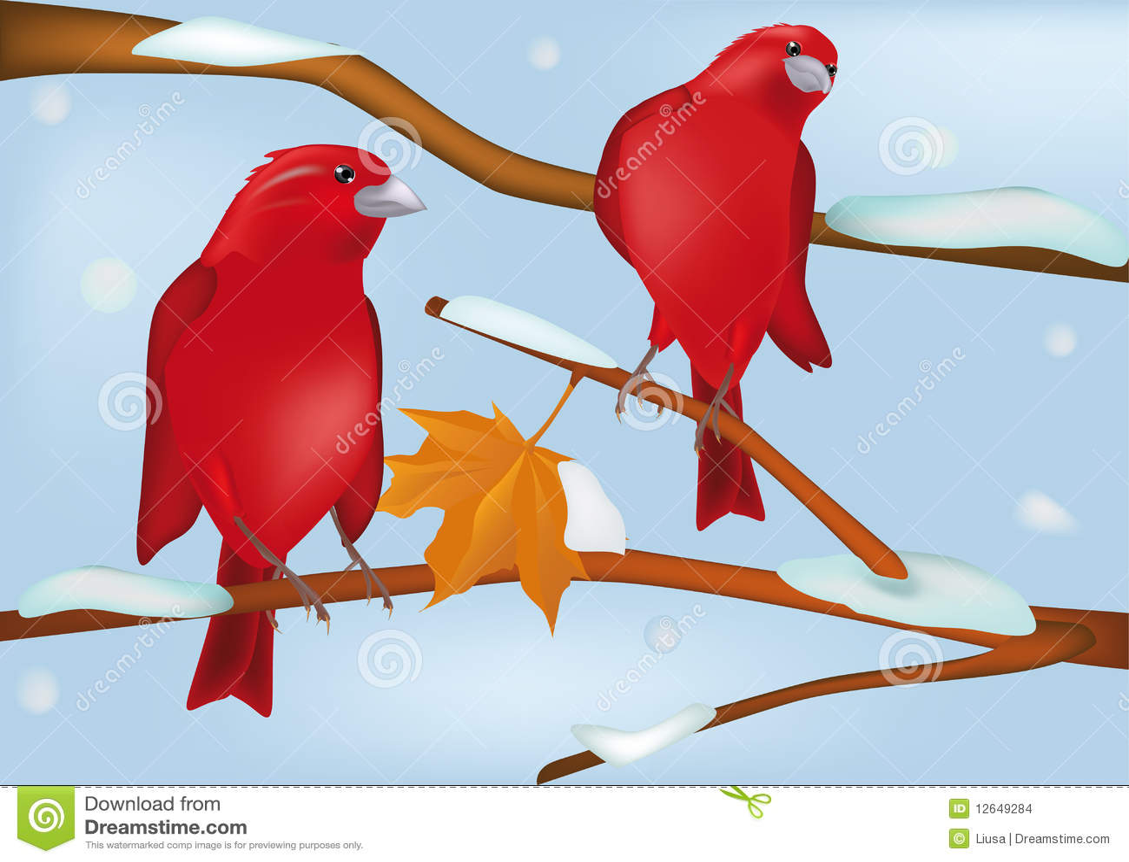 Ptaków czerwieni zima
