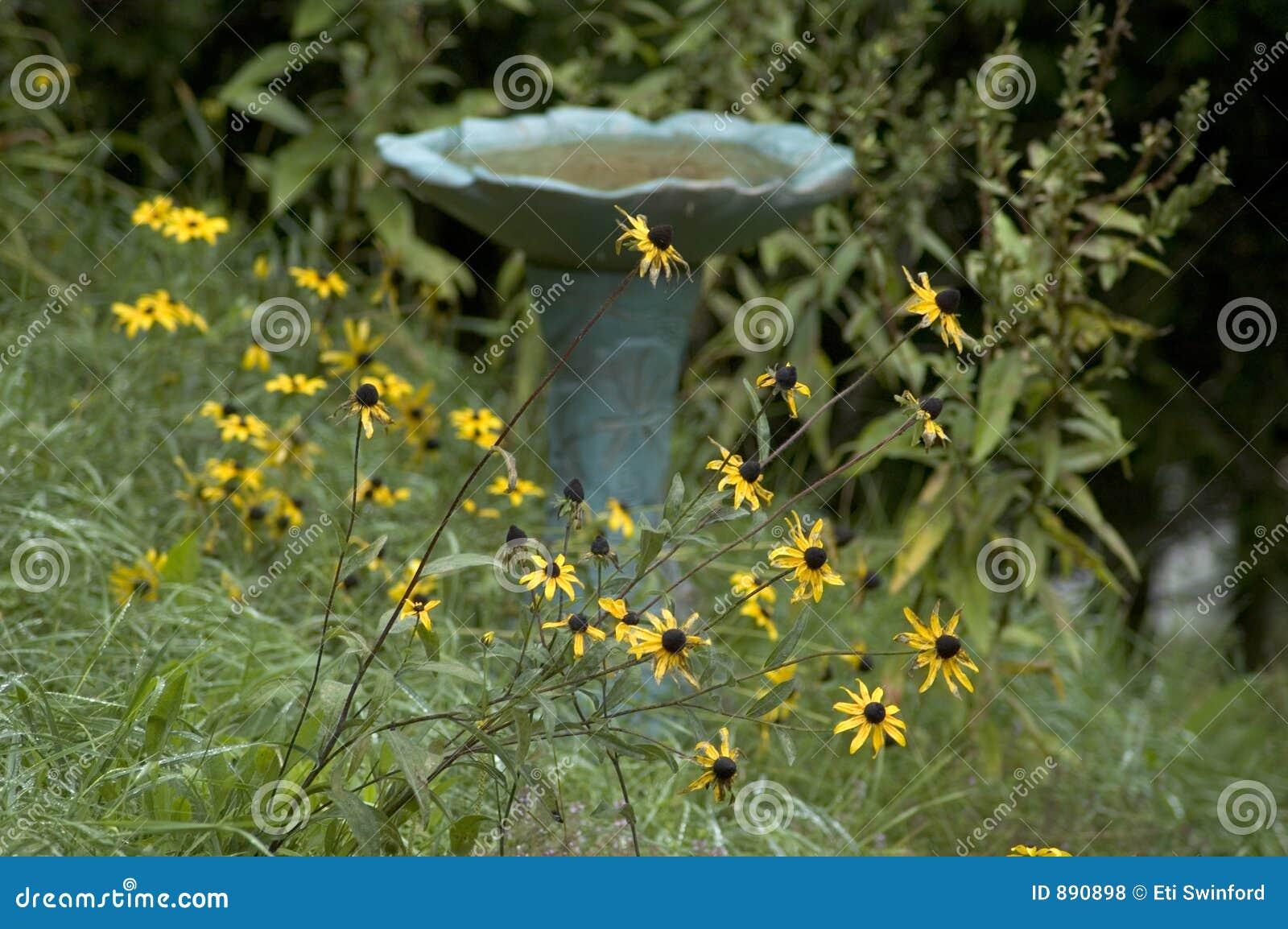 Ptaków kąpielowe kwiaty