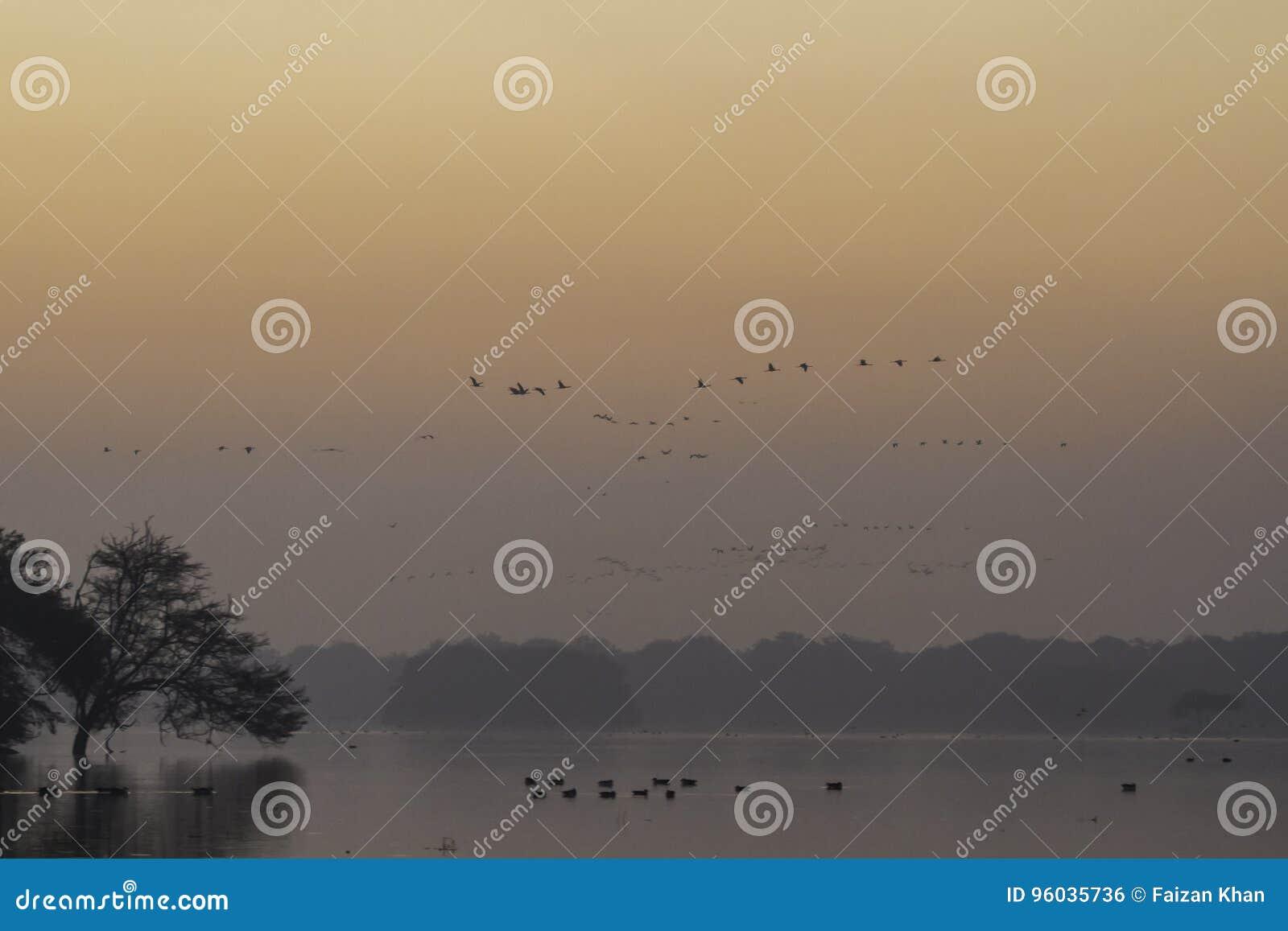 Ptak Gromadzi się Pomarańczowego niebo i jezioro