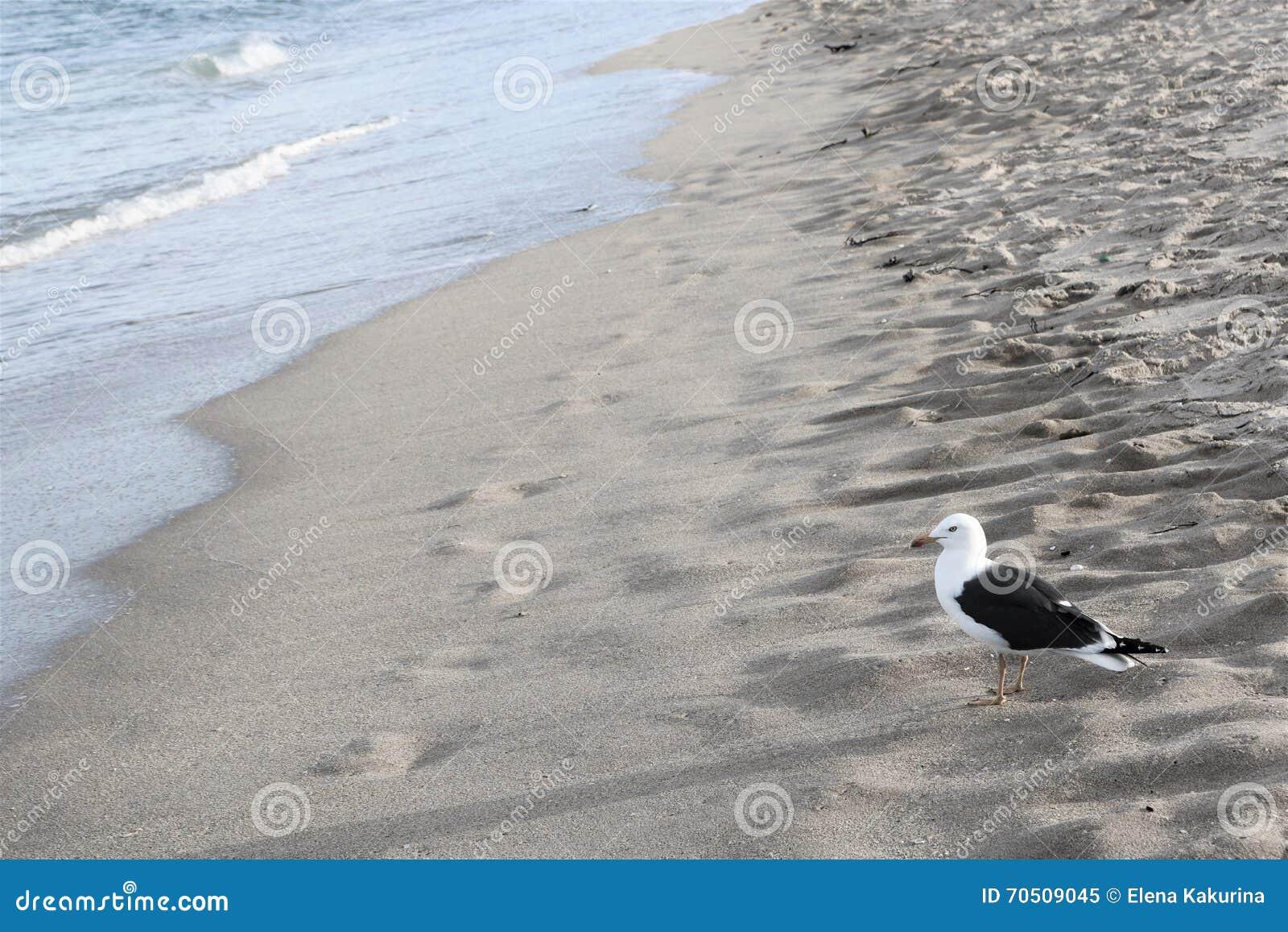 Ptak i ocean