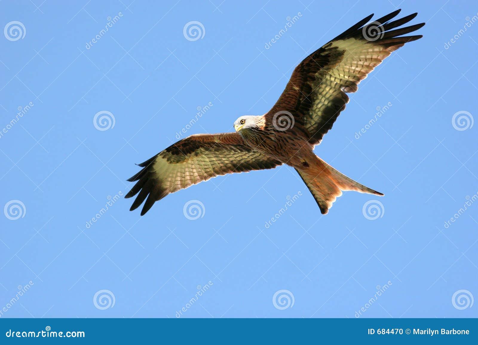 Ptak, który uwalnia