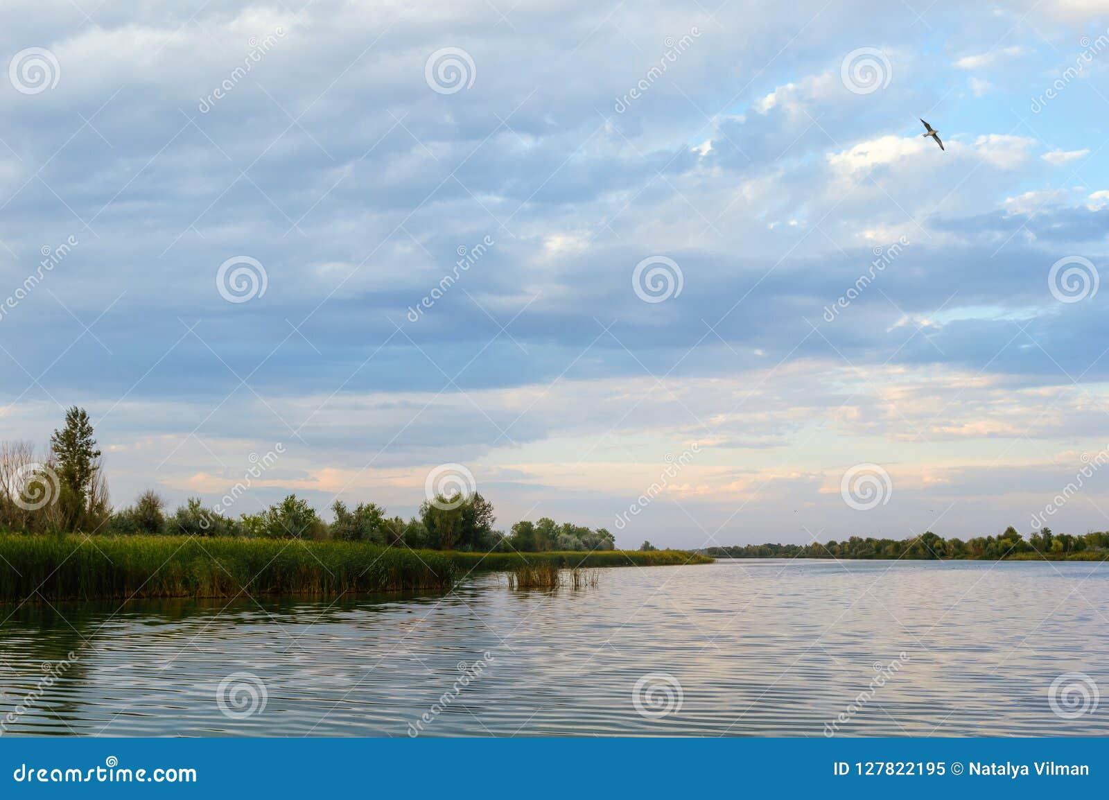 Ptak lata nad małą rzeką