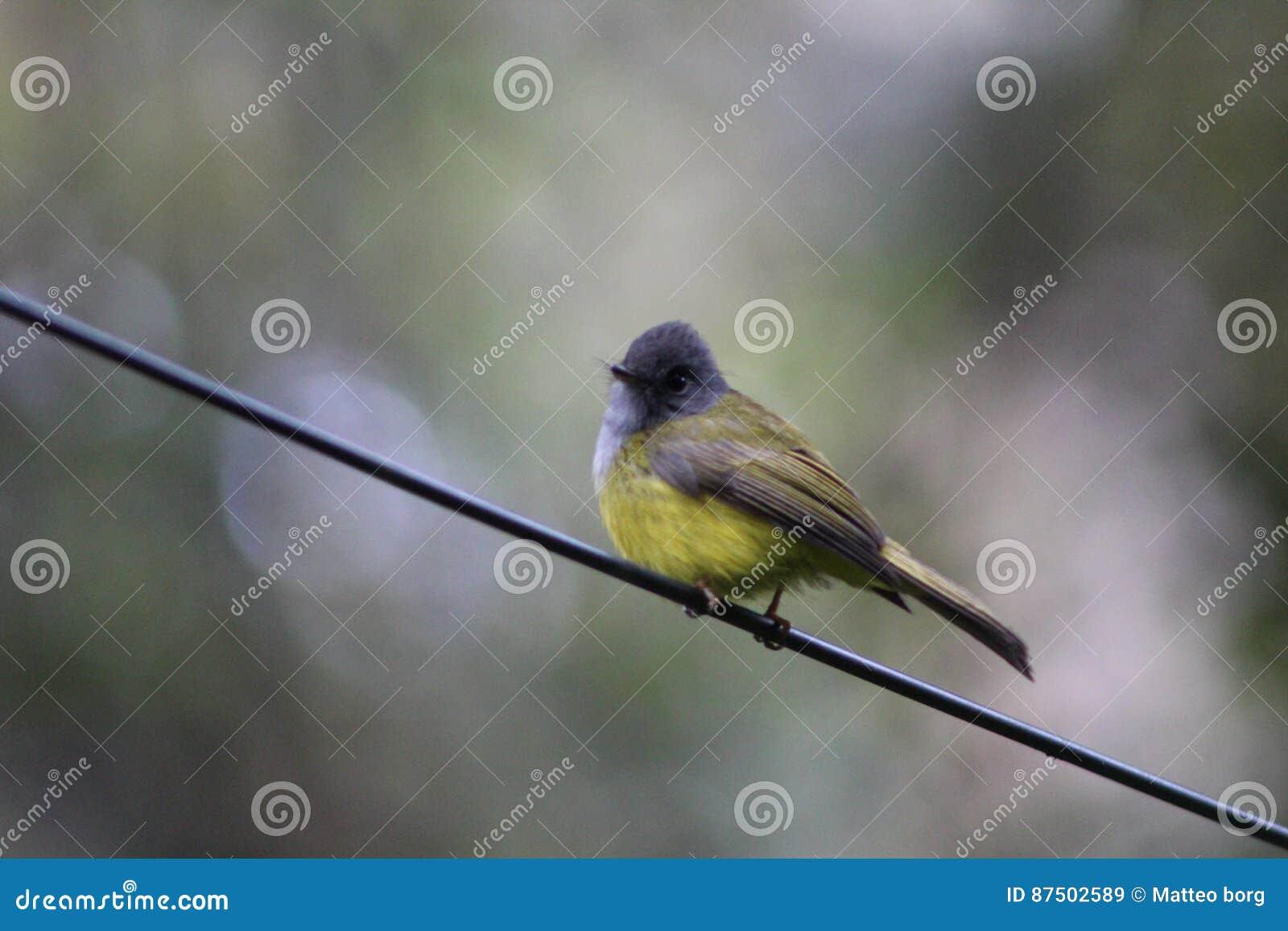 Ptak na drucie
