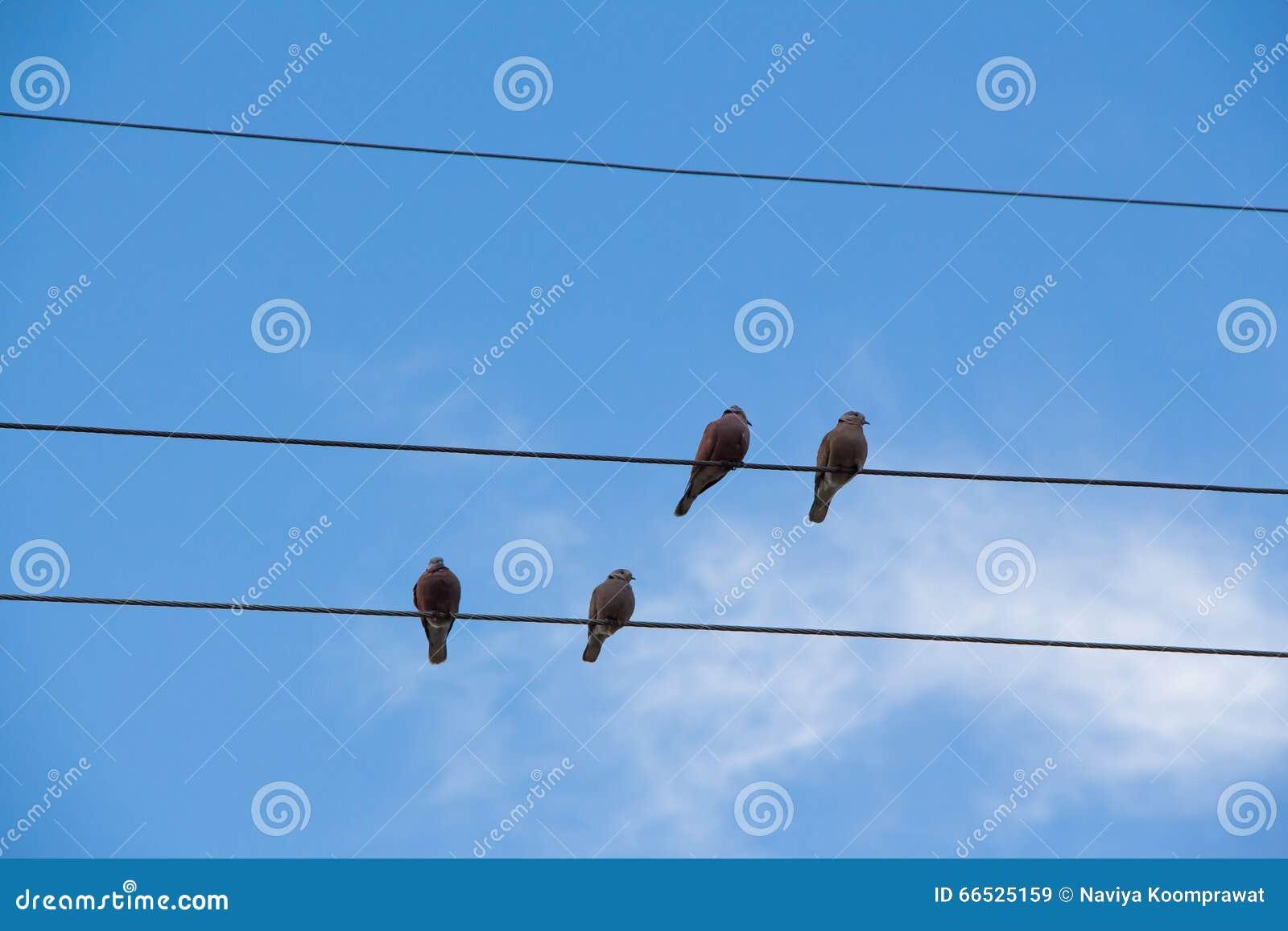 Ptak na kabel linii