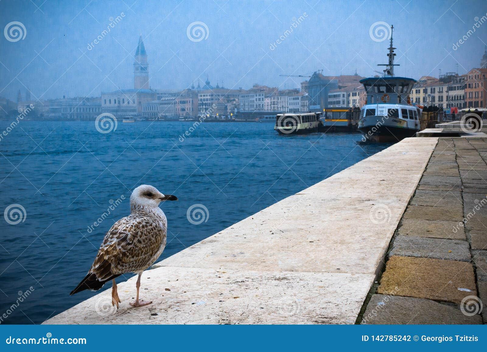 Ptak siedzi w krawędzi wybrzeże w Venice ulicie