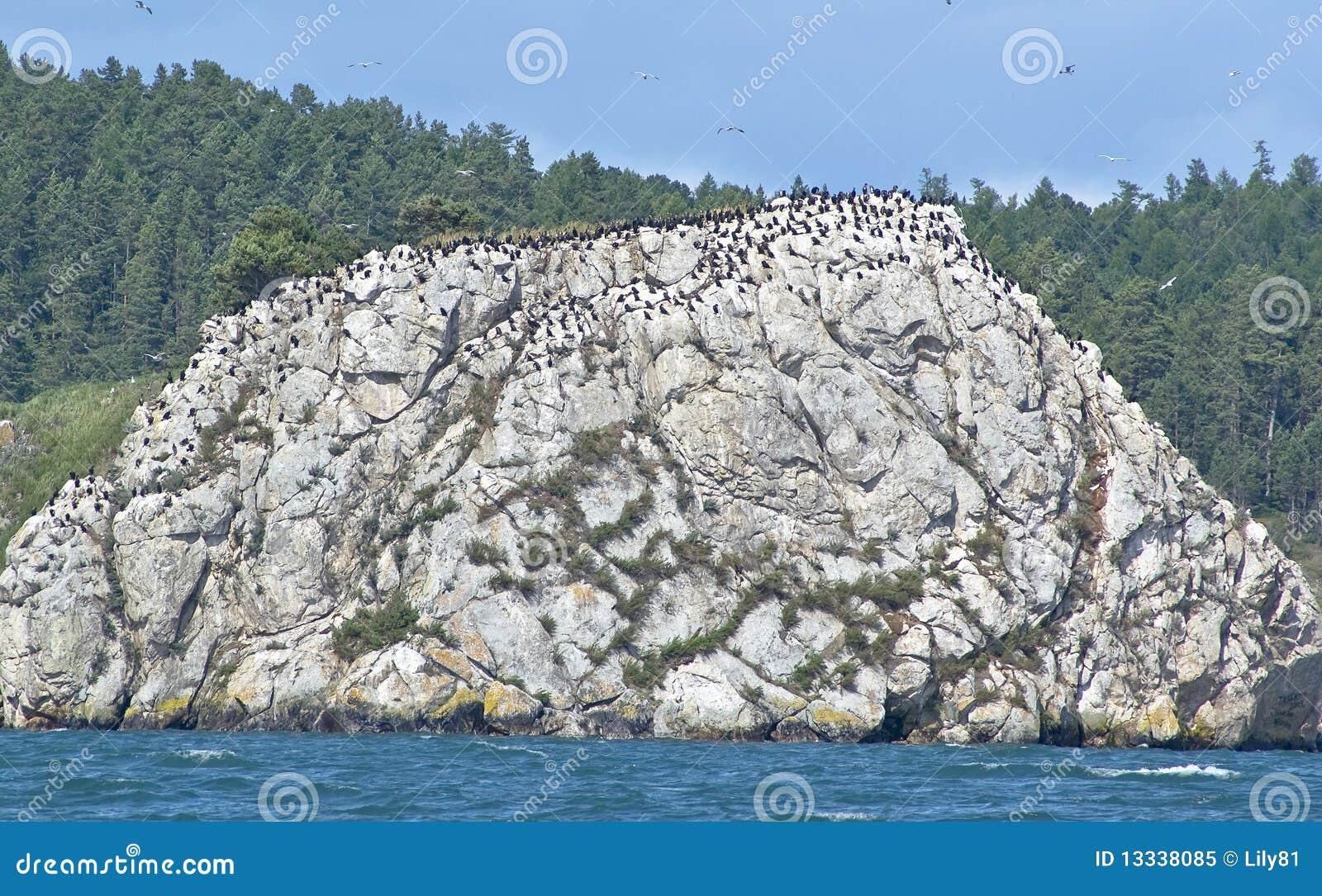 Ptak skała