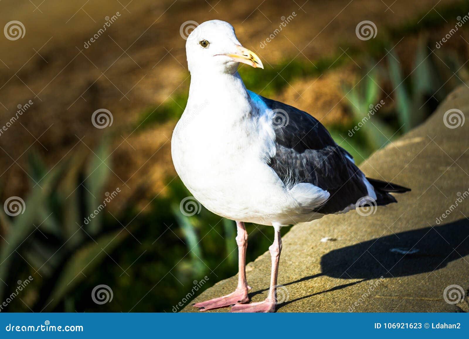 Ptak umieszczający na skale