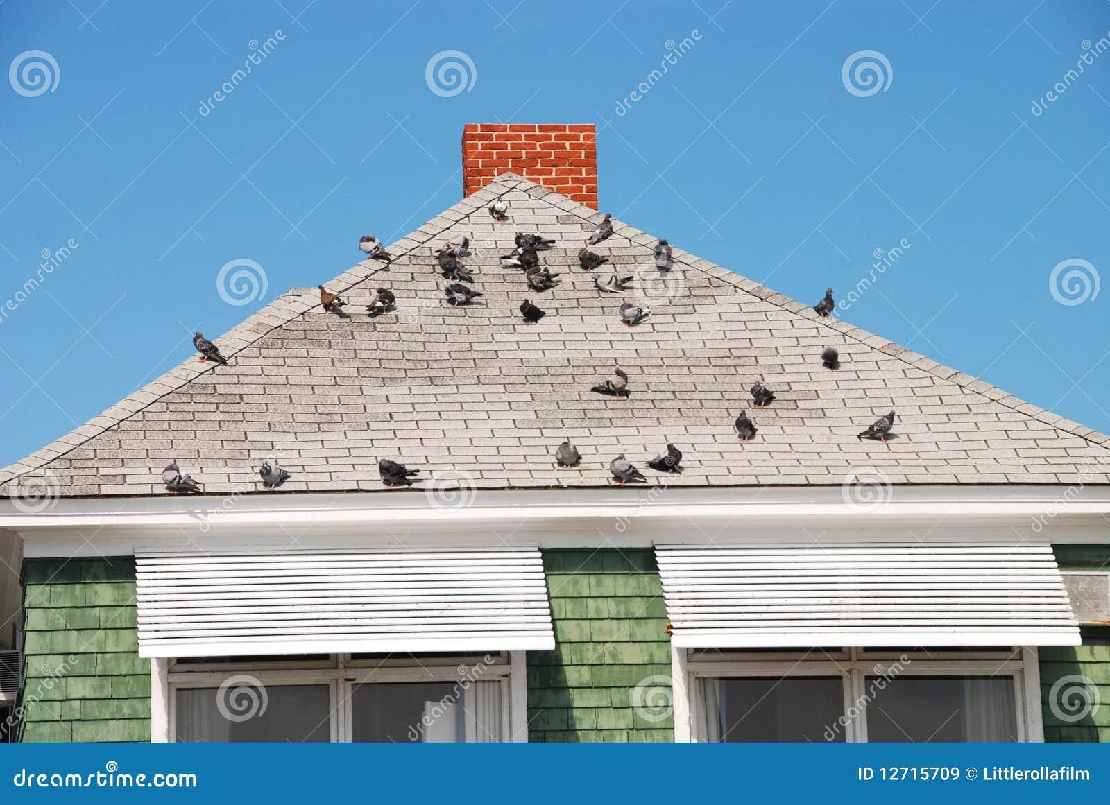 Ptaka dach