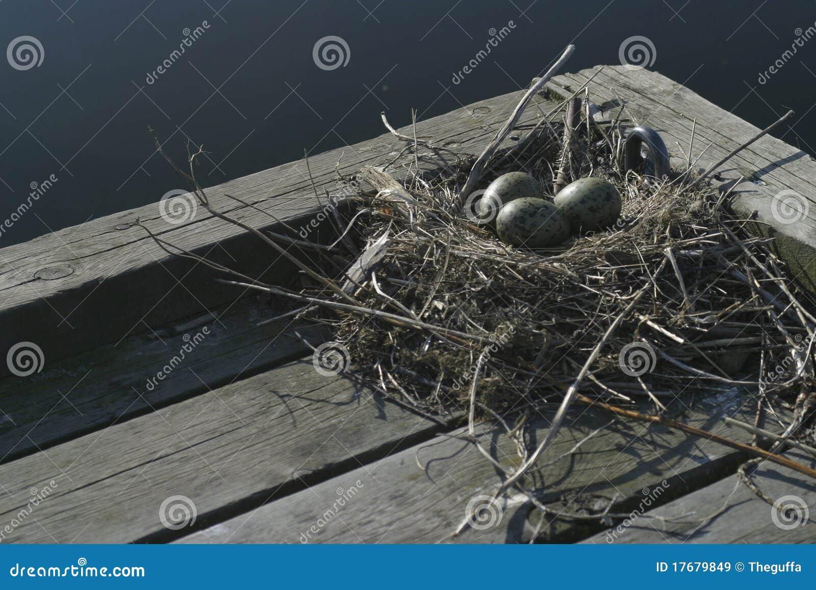 Ptaka gniazdeczko