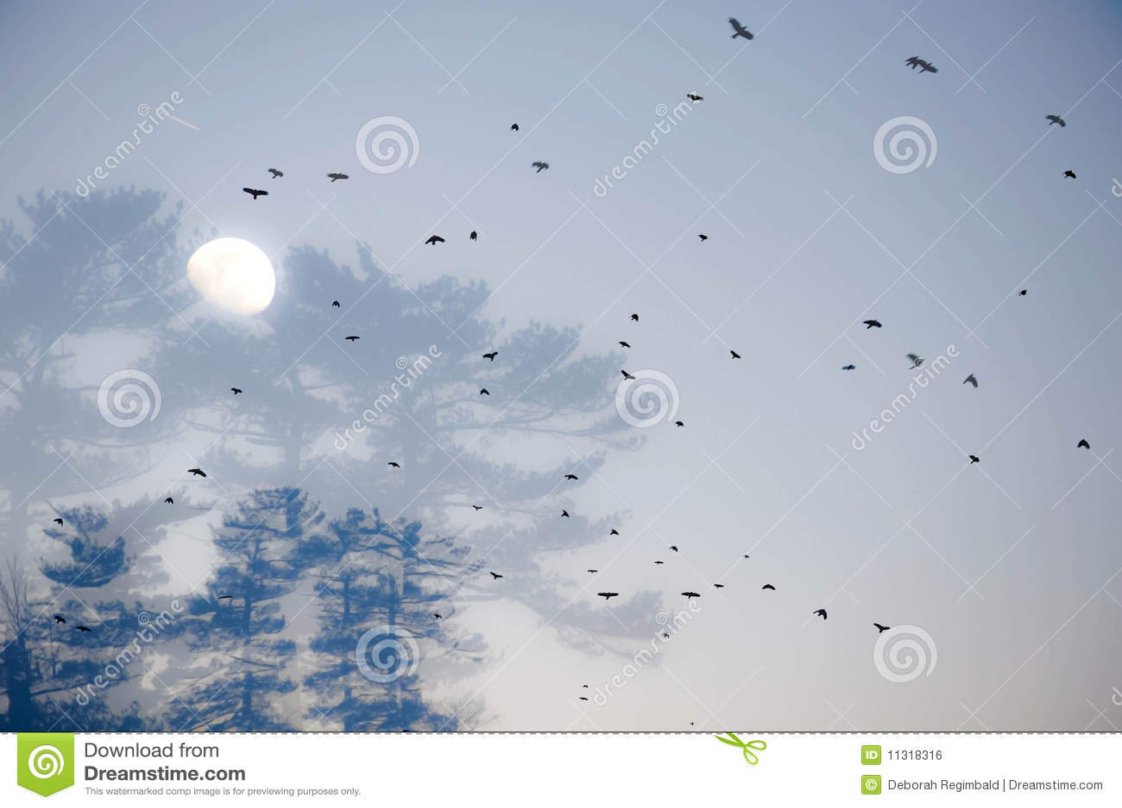 Ptaka kierdel