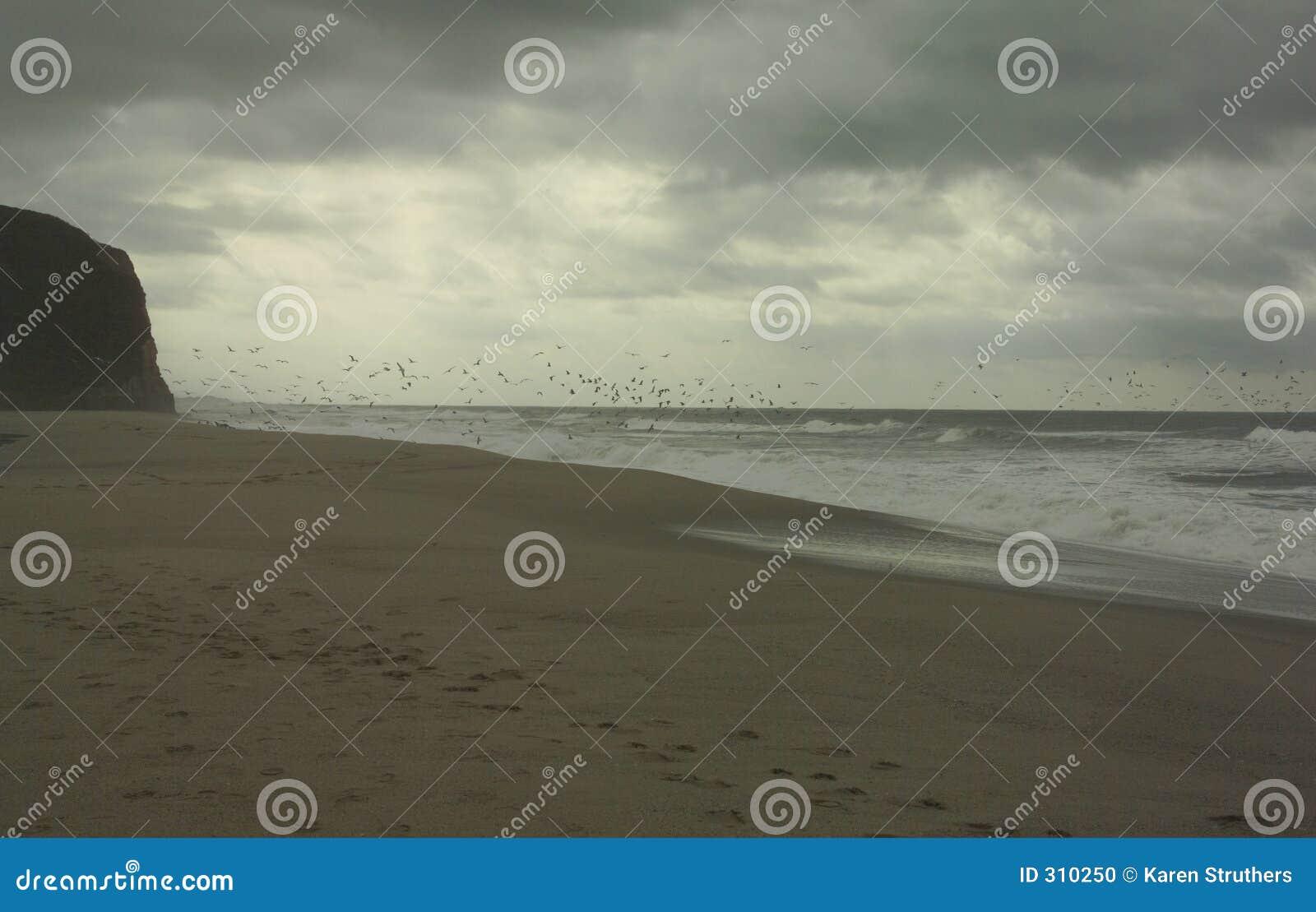 Ptaka lot nad morzem