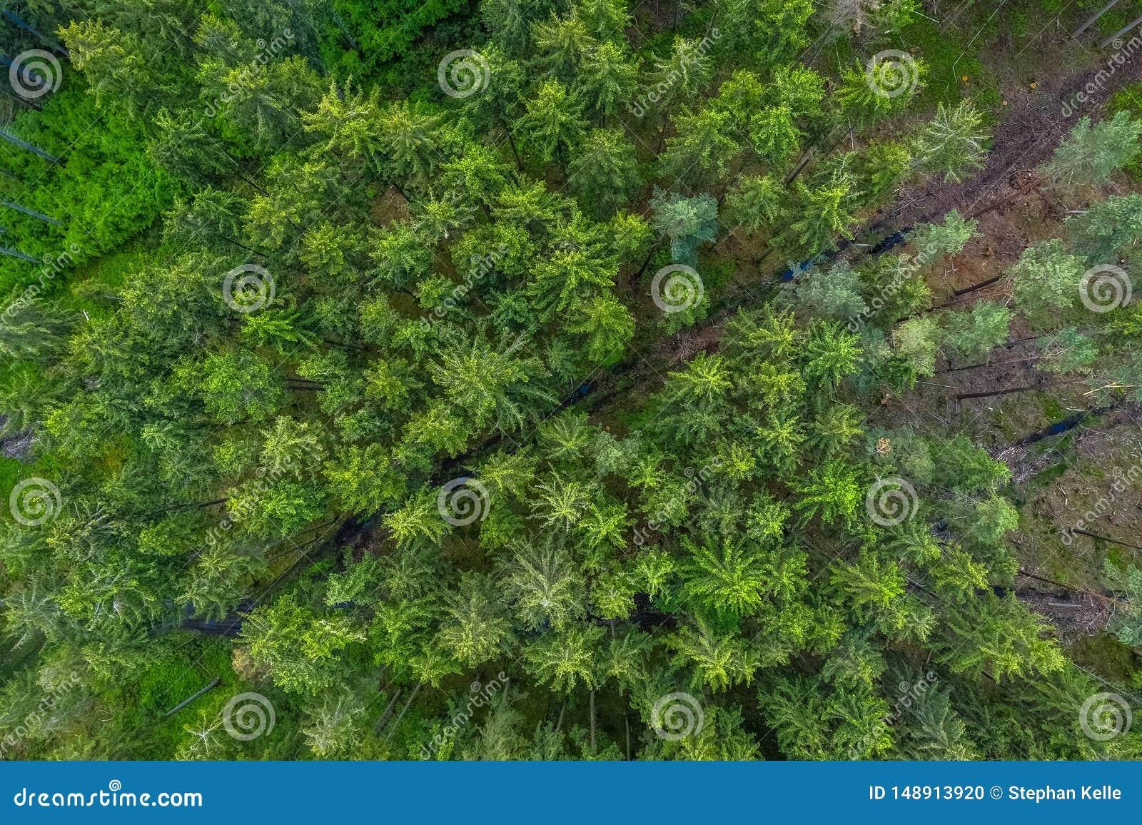 Ptaka oka widok od trutnia pusta droga przez lasu z wysokimi drzewami