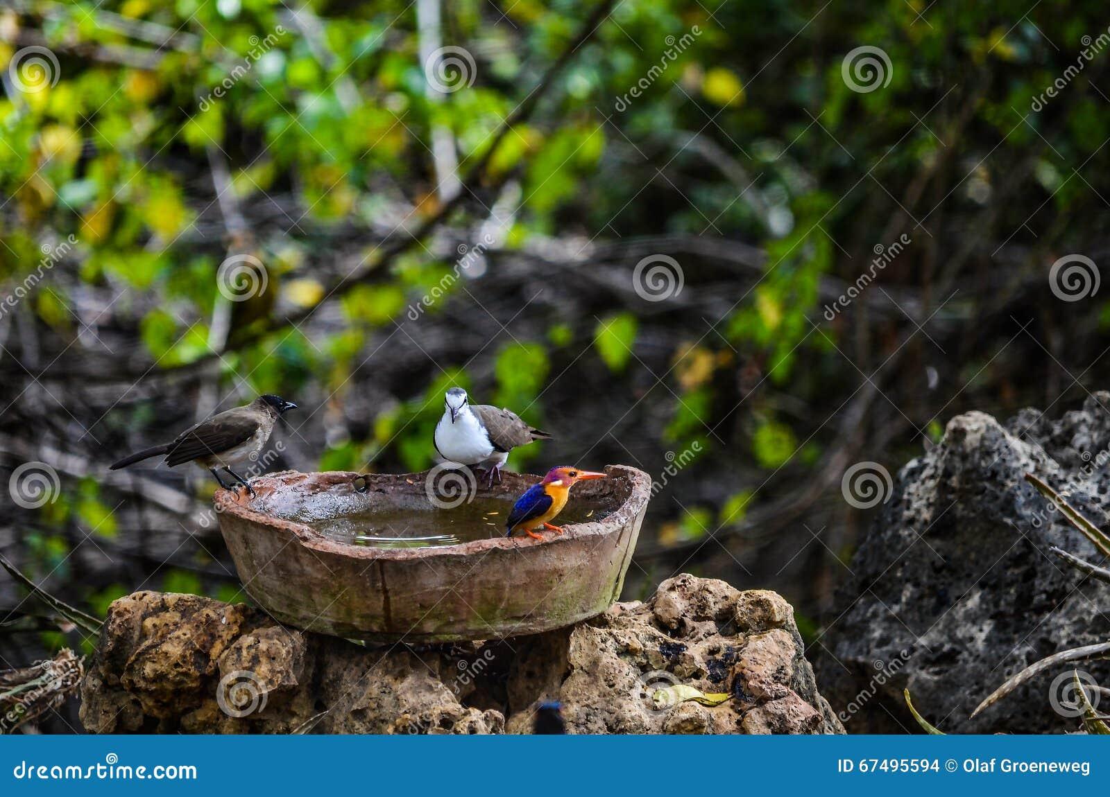 Ptaki Bierze skąpanie