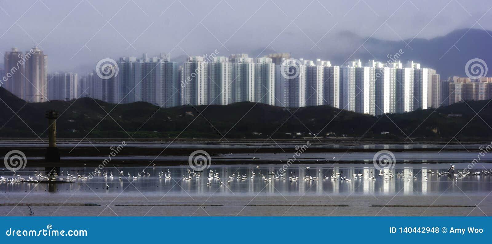 Ptaki, Egrets w wodzie na morzu z domowym odbiciem