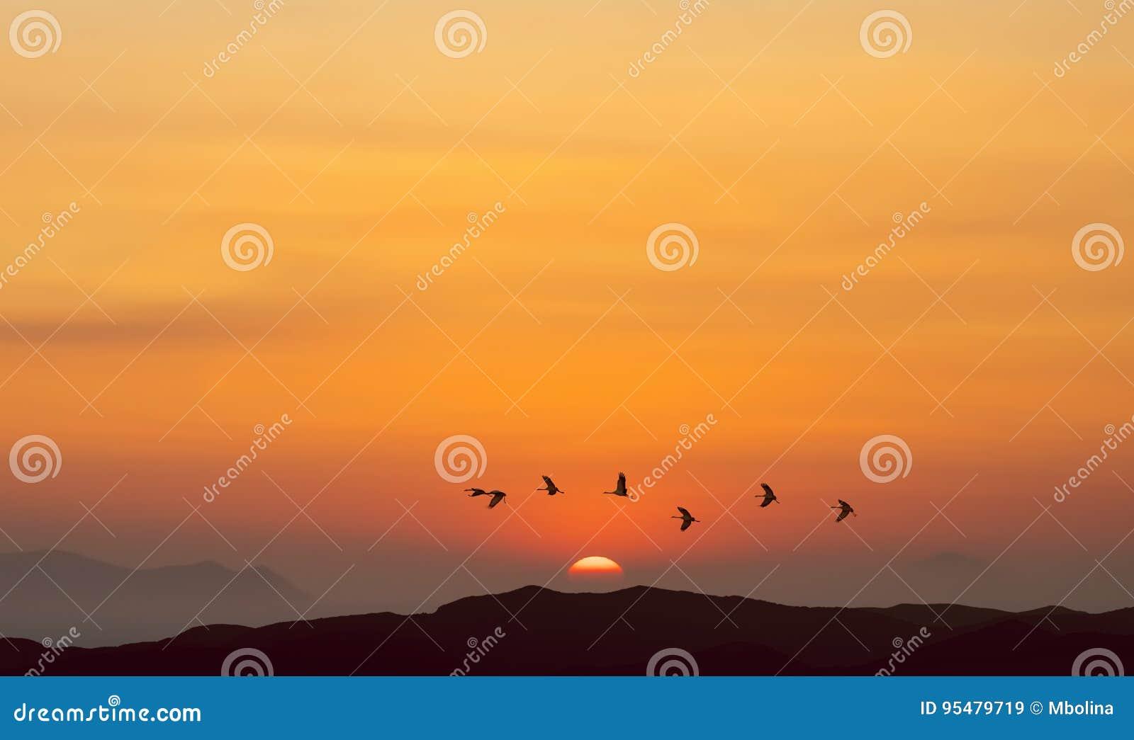 Ptaki lata przy wschodem słońca nad górami