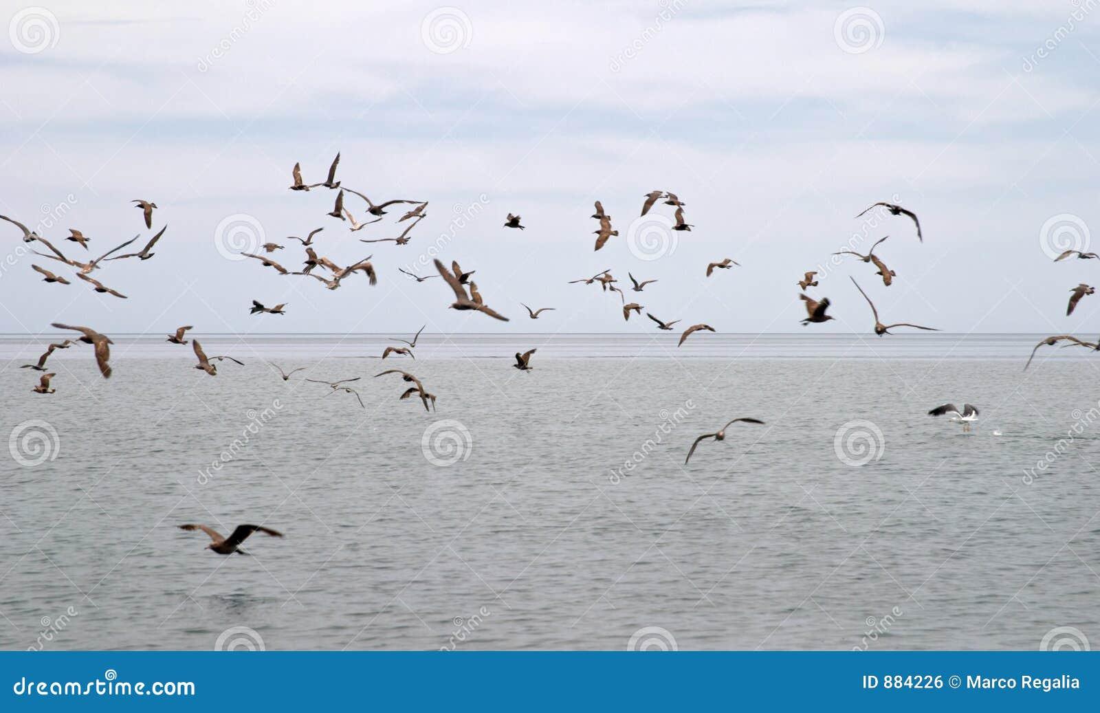 Ptaki morskie