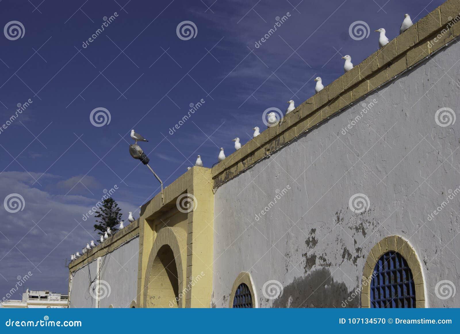 Ptaki na ścianie z rzędu