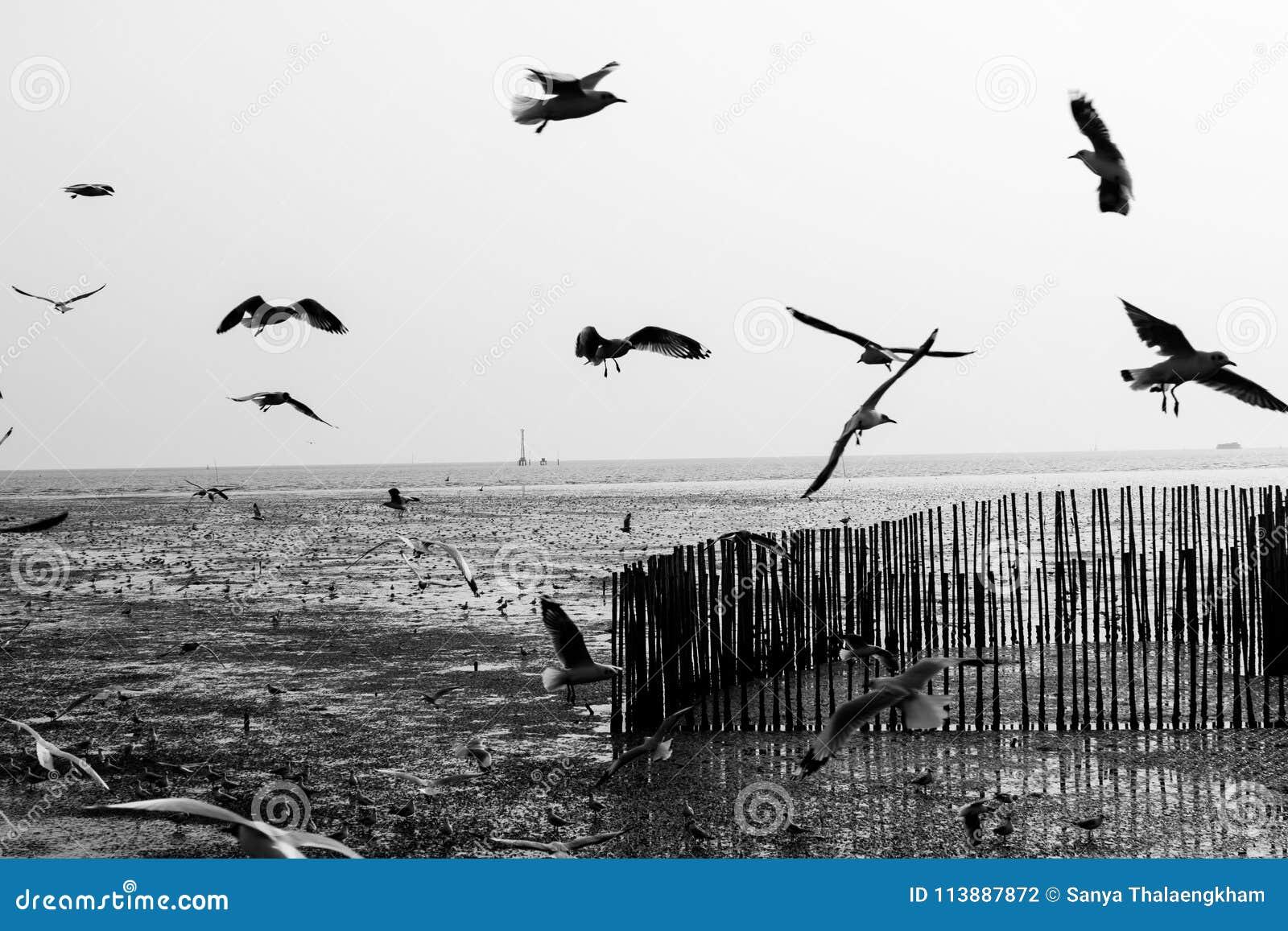 Ptaki na niebach dzisiaj