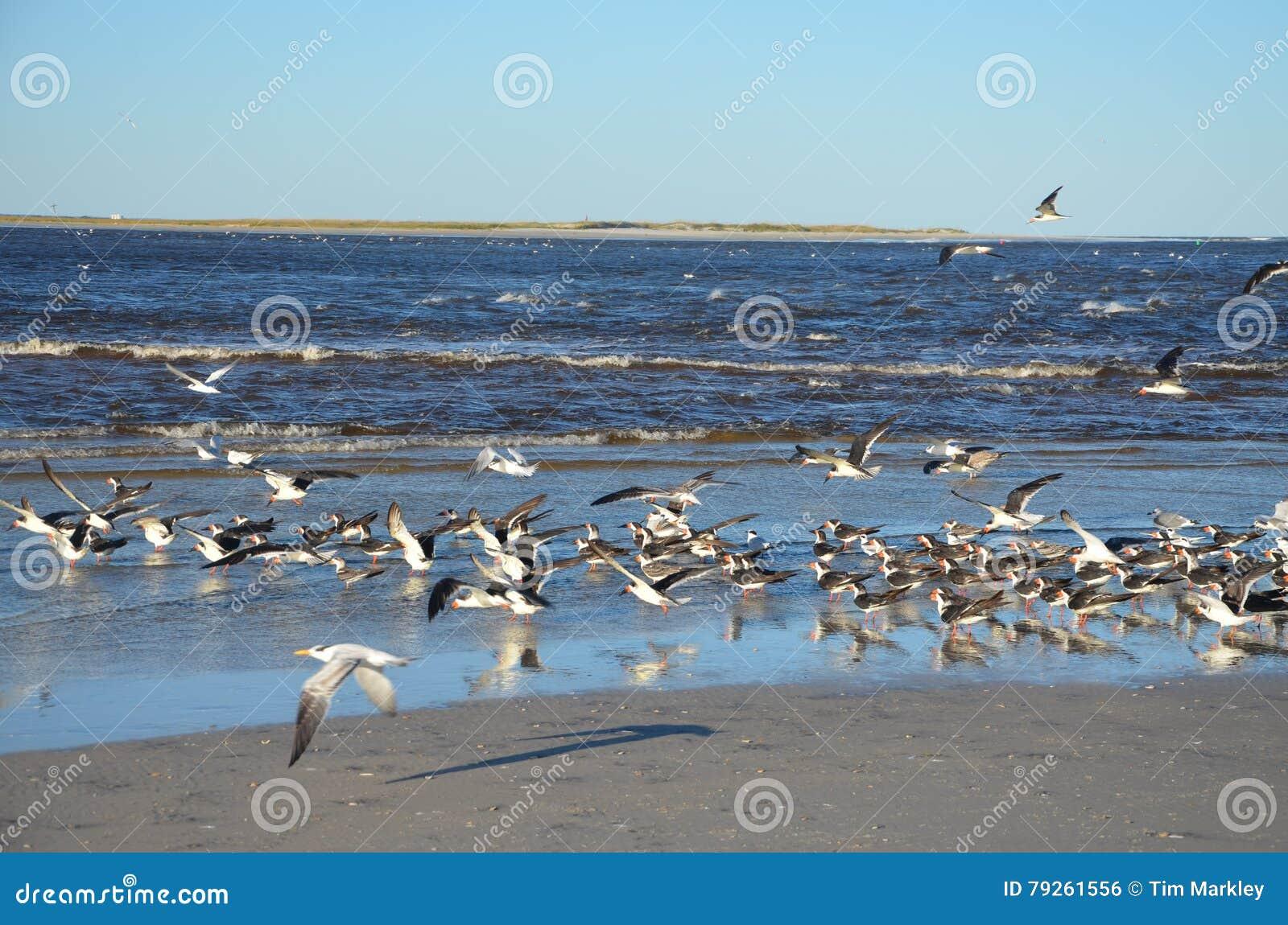 Ptaki na wodzie