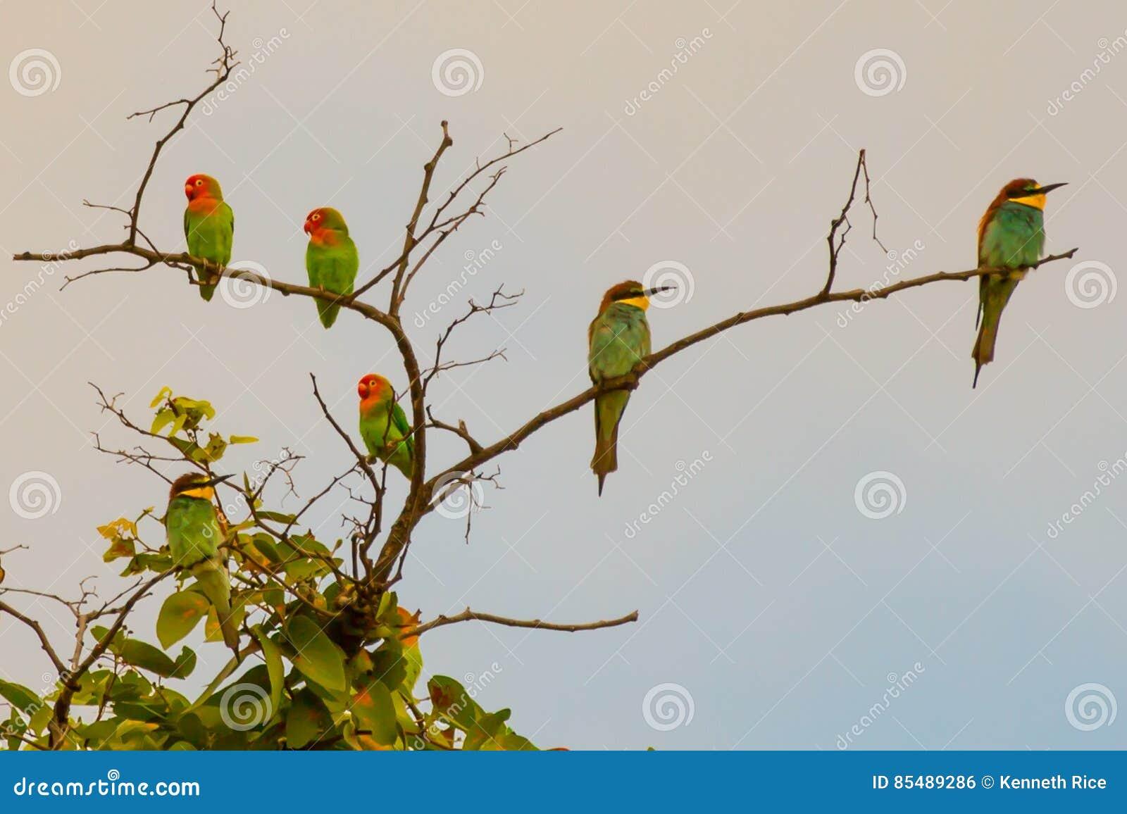 Ptaki piórko