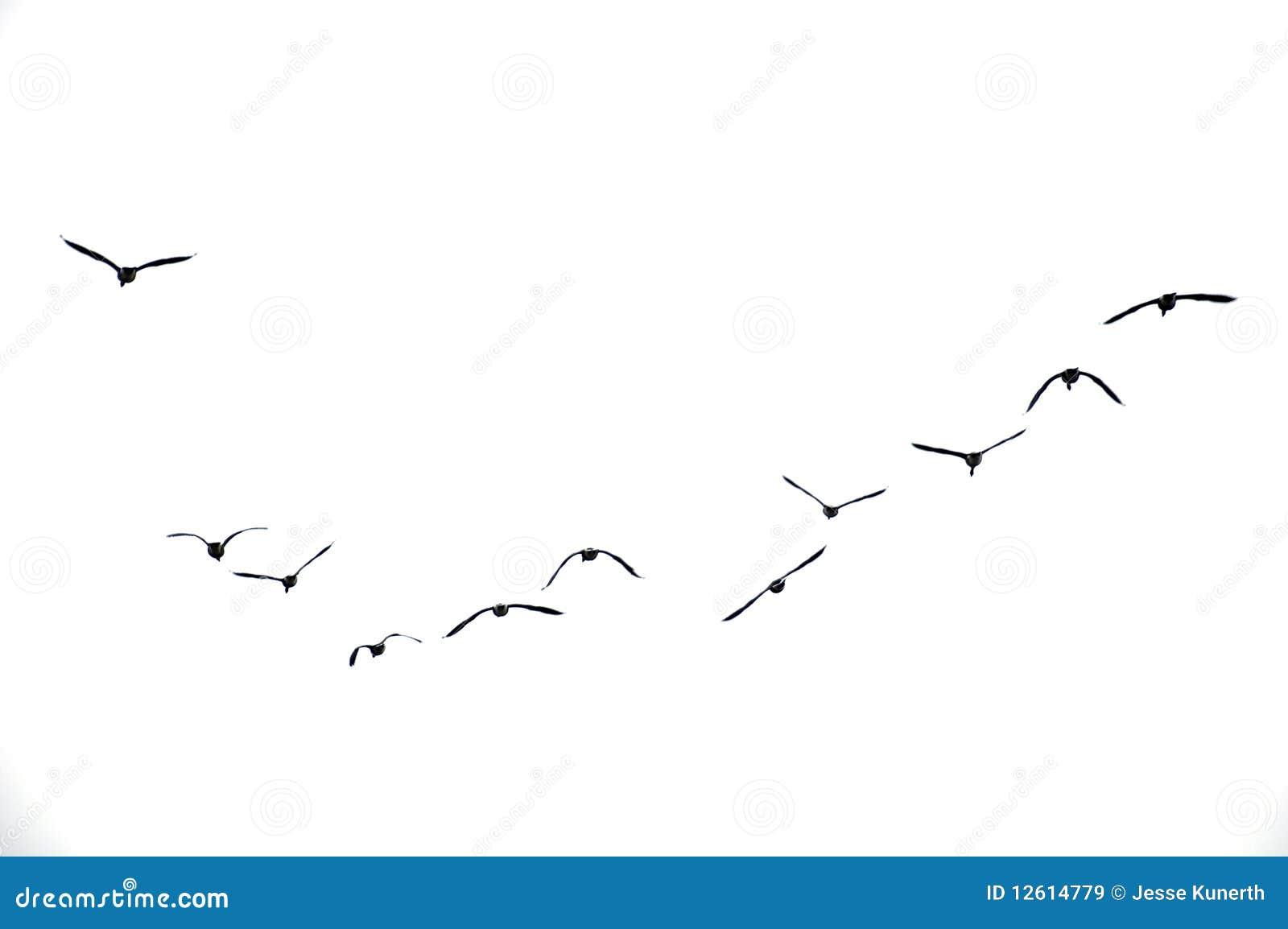 Ptaki target1697_1_ overcast niebo