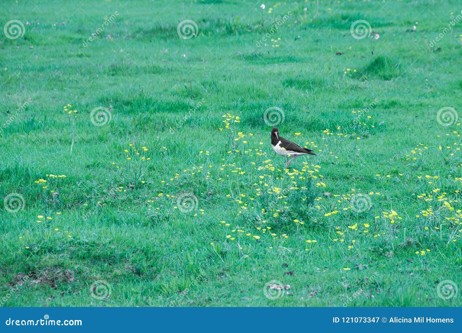Ptaki w ich naturalnym siedlisku