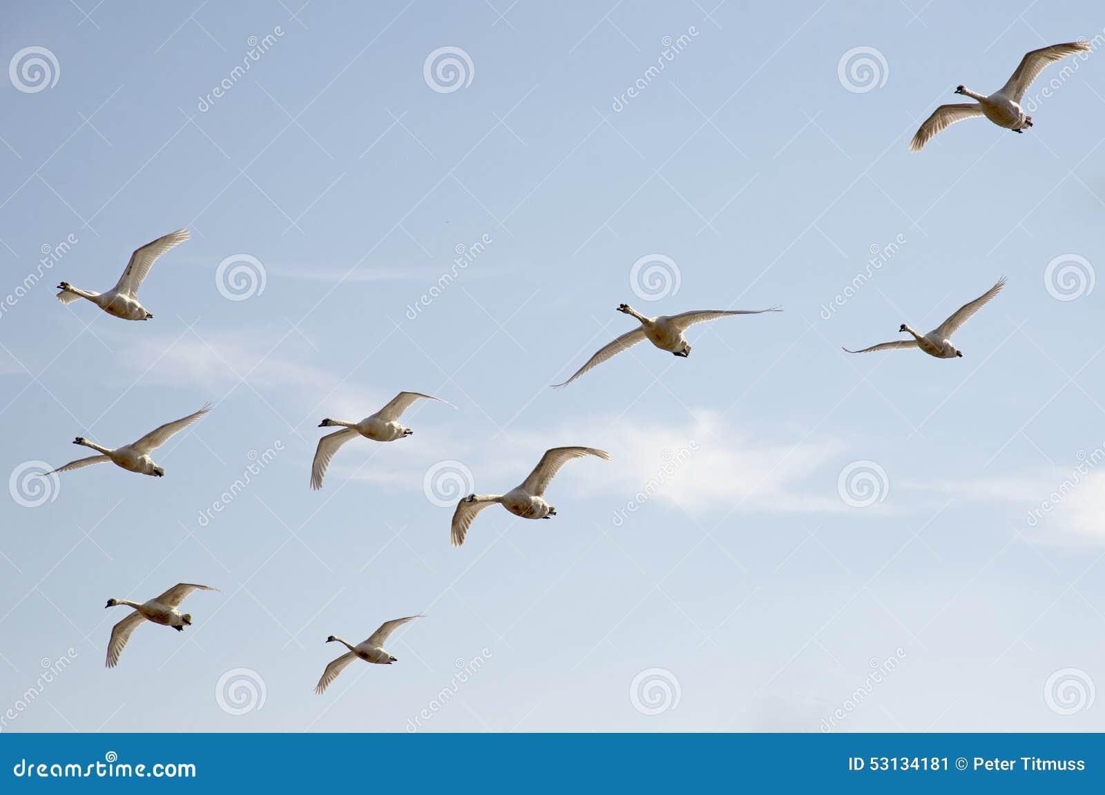 Ptaki W locie