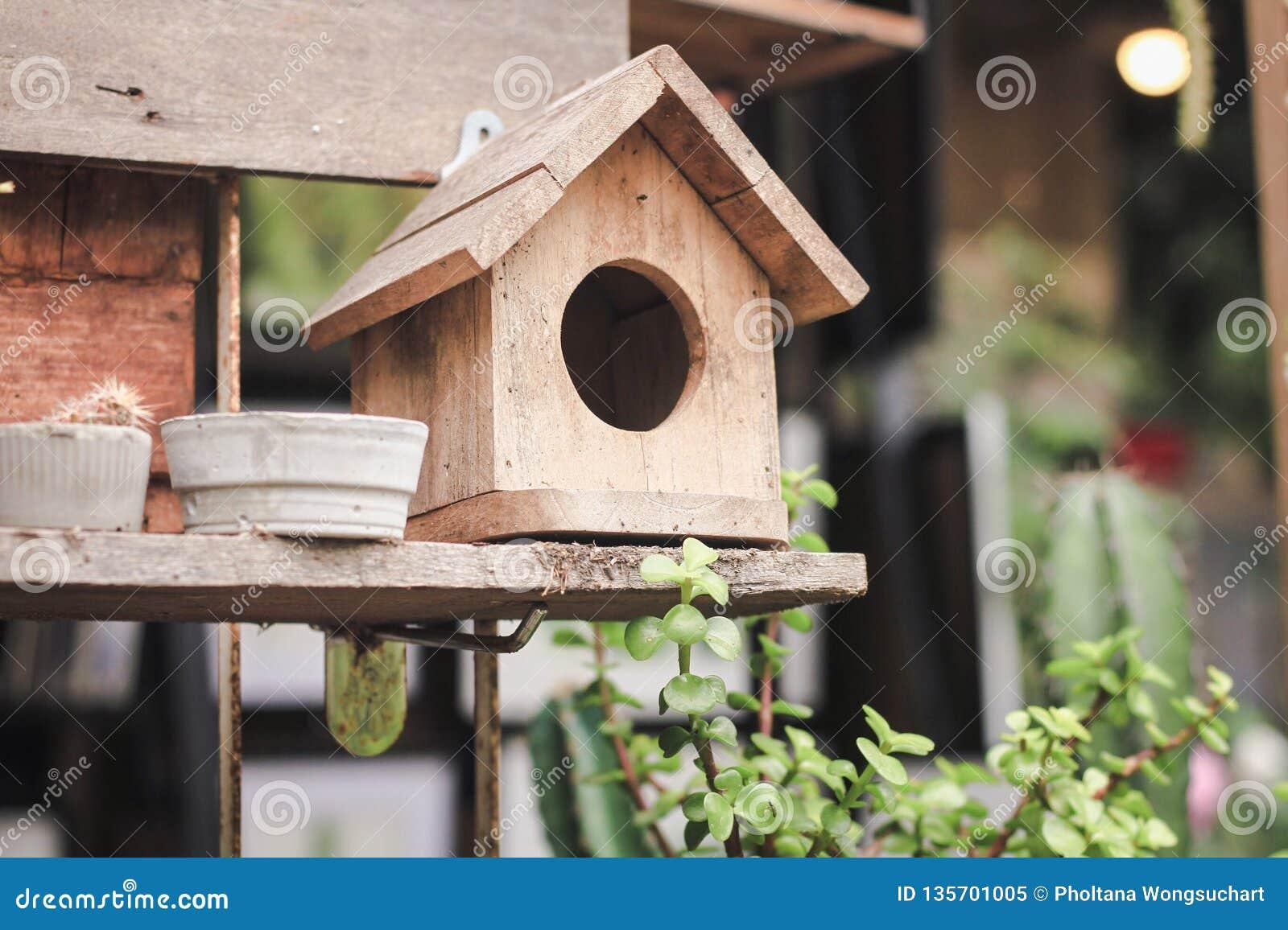 Ptasi dom zrobi naturalny farbujący drewno umieszczający na drewnianych półkach