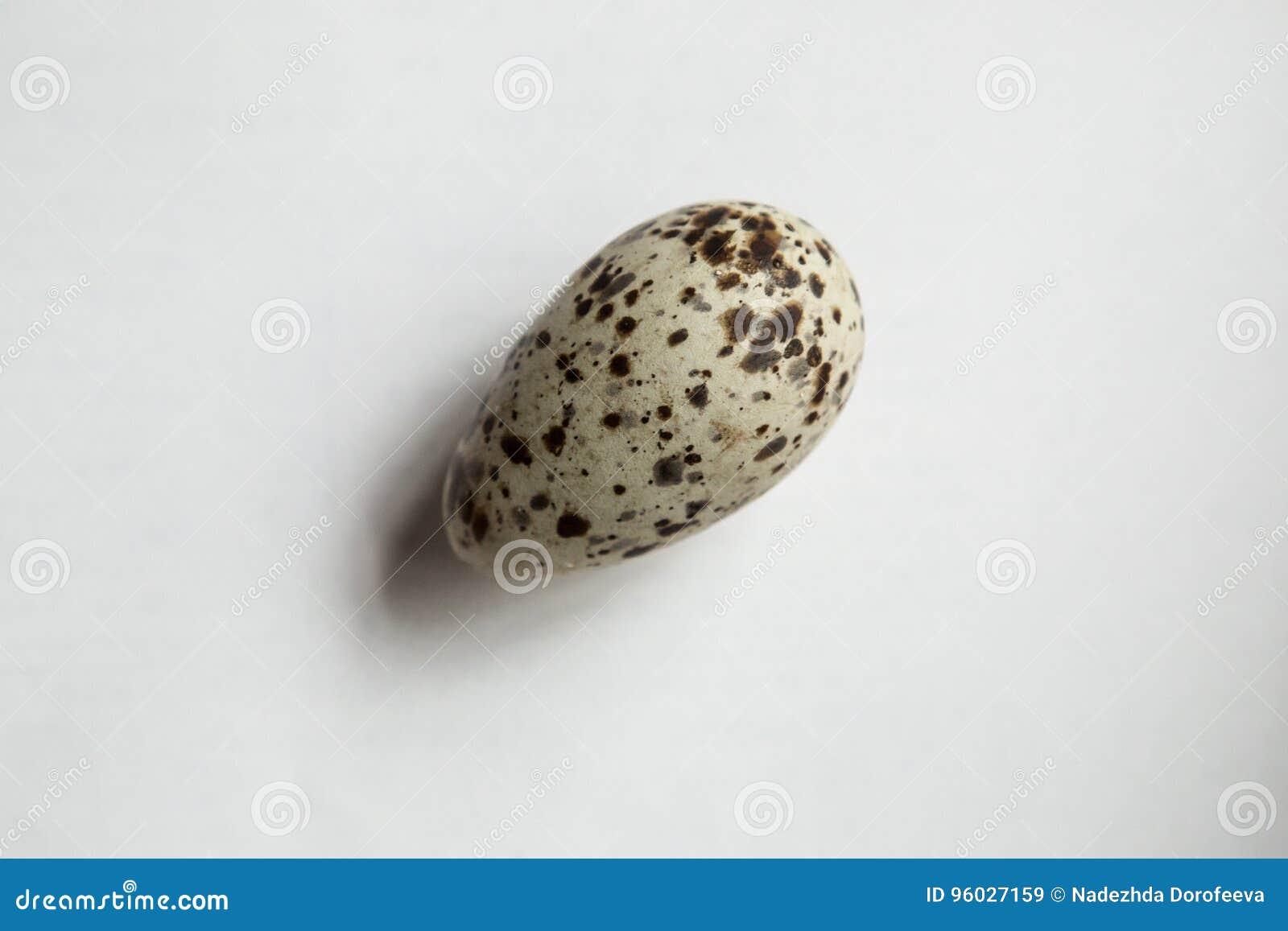 Ptasi jajko z pstrzy