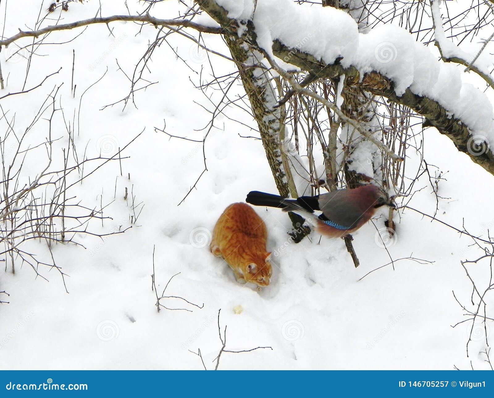 Ptasi Jay obsiadanie na gałąź Pi?kny ptak w naturze Szczeg??y w g?r? i