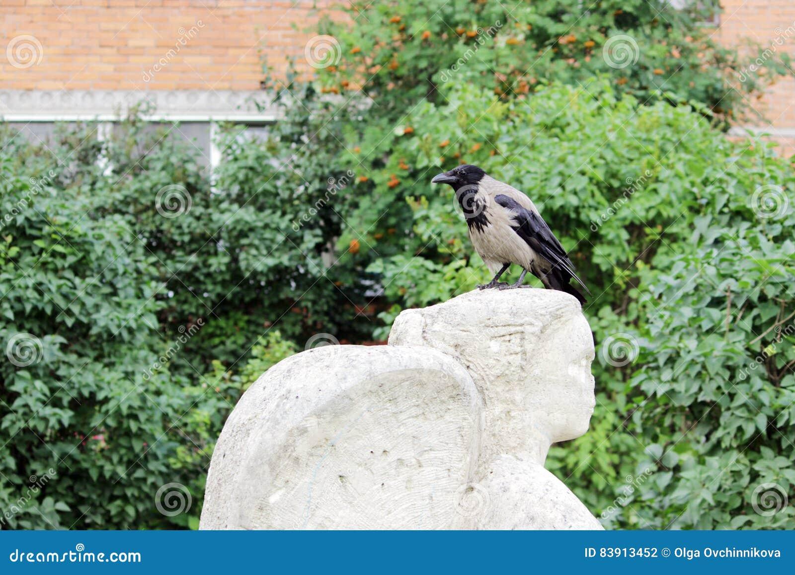 Ptasi kruk siedzi na głowie statua anioła który ostrożnie wprowadzać wandale szczerbiący się,