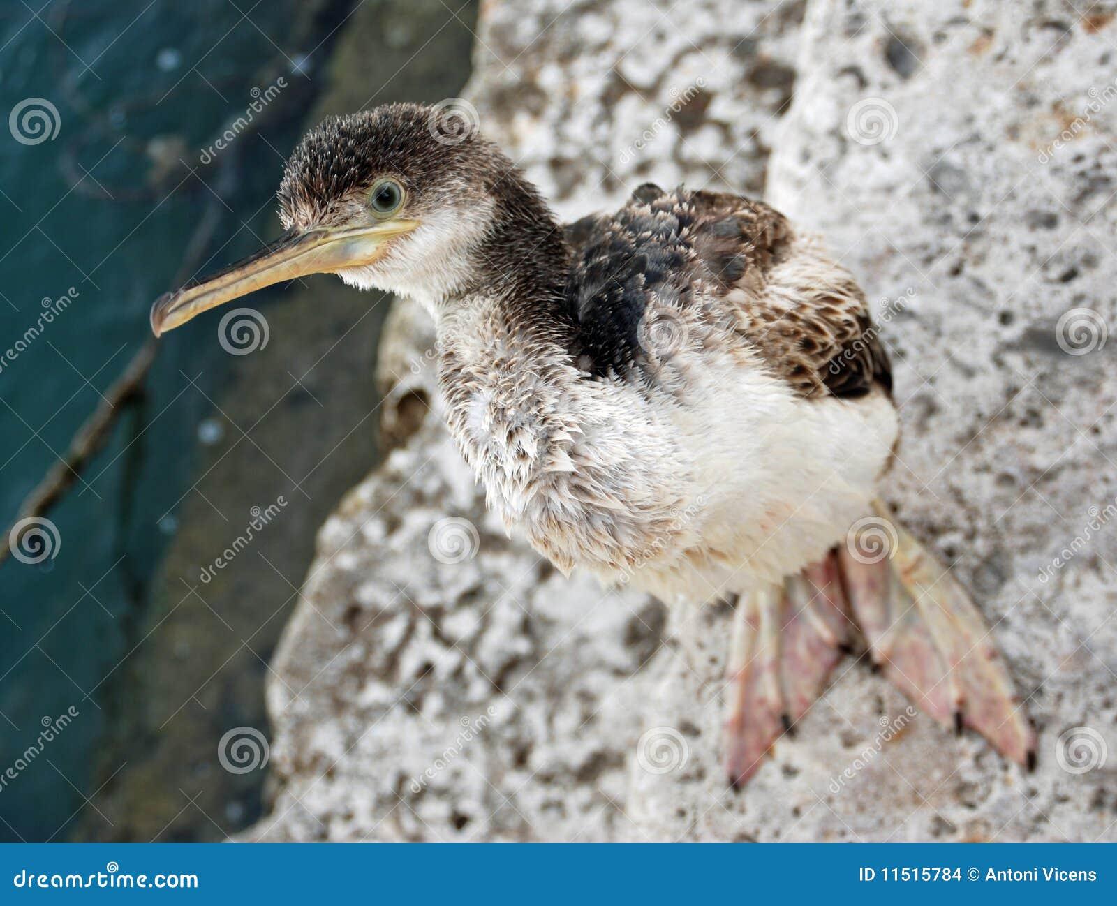 Ptasi morze