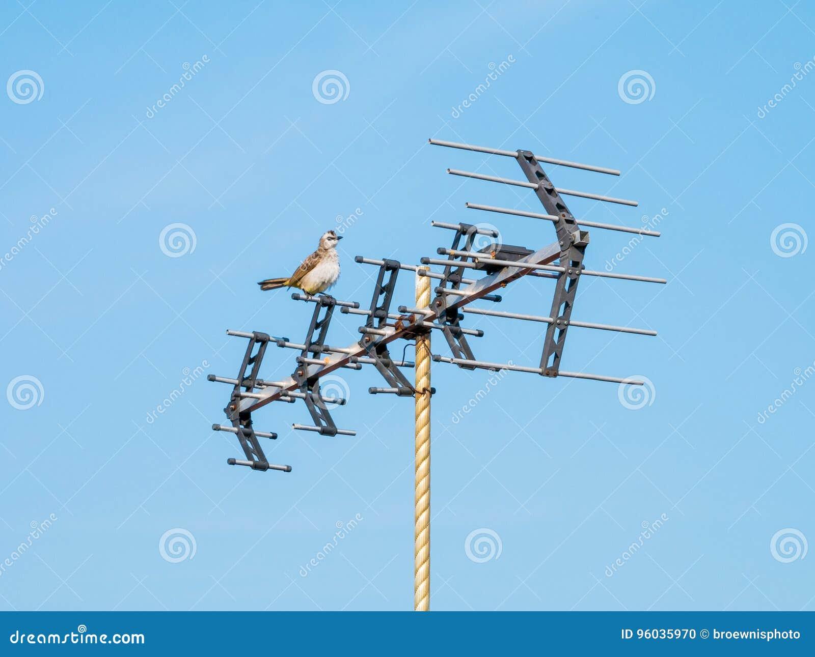Ptasi obsiadanie na antenie