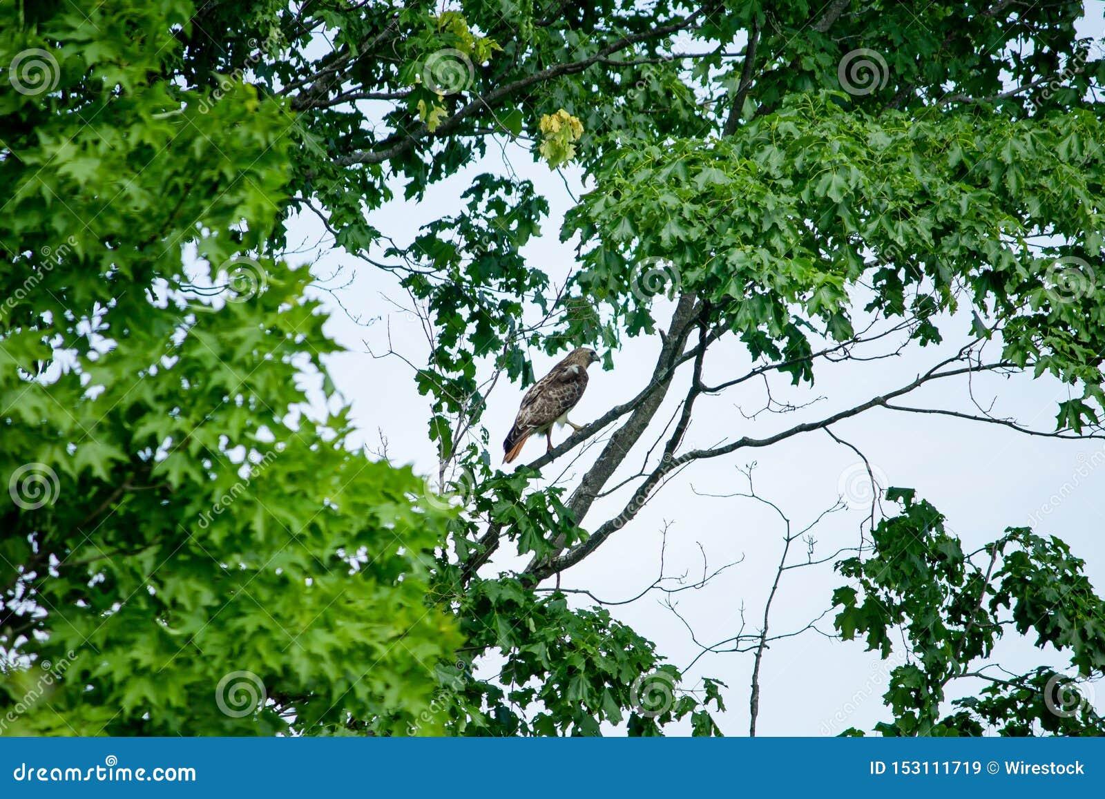 Ptasi obsiadanie na gałąź otaczającej zielonymi liśćmi