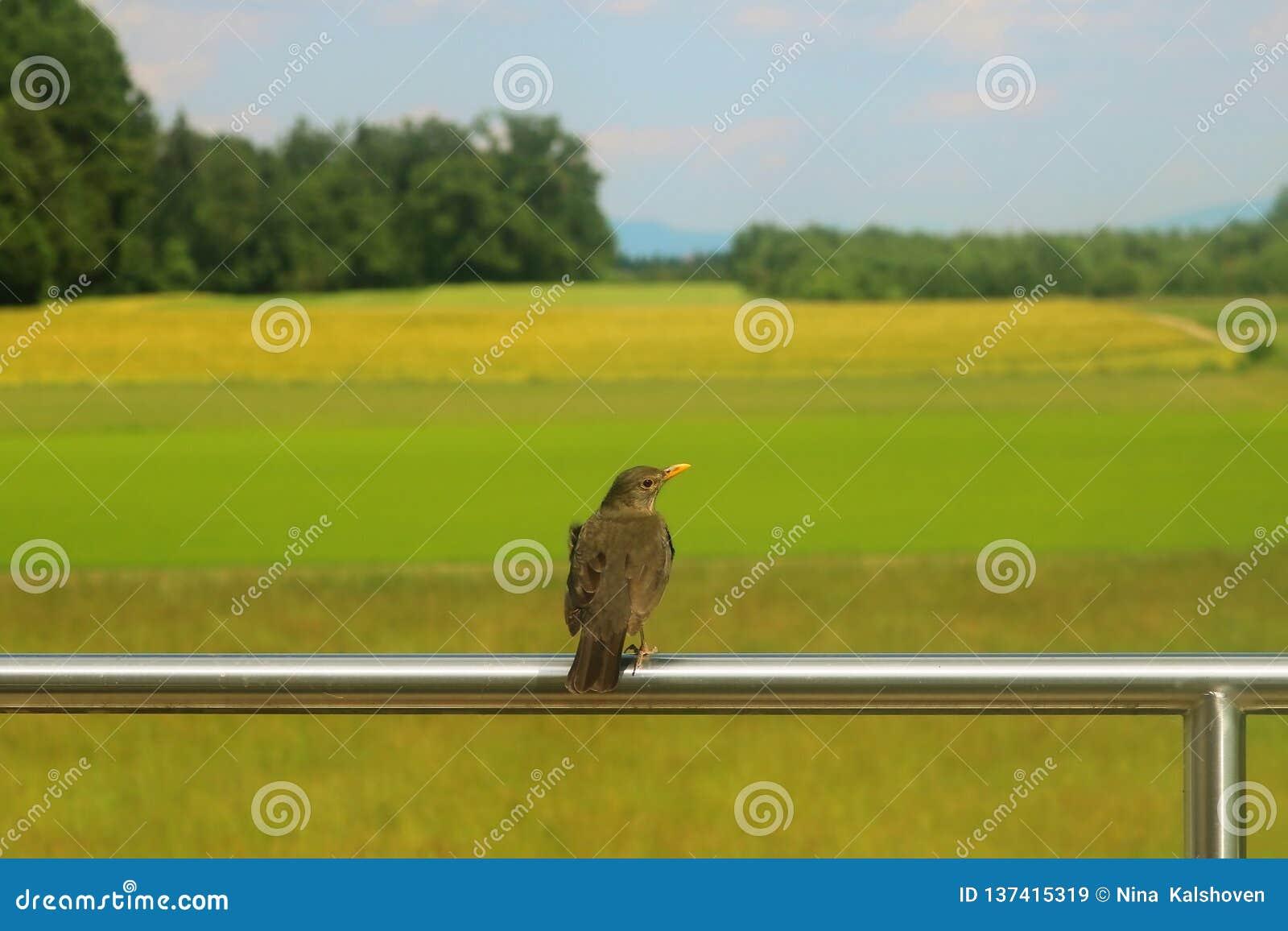 Ptasi obsiadanie na ogrodzeniu